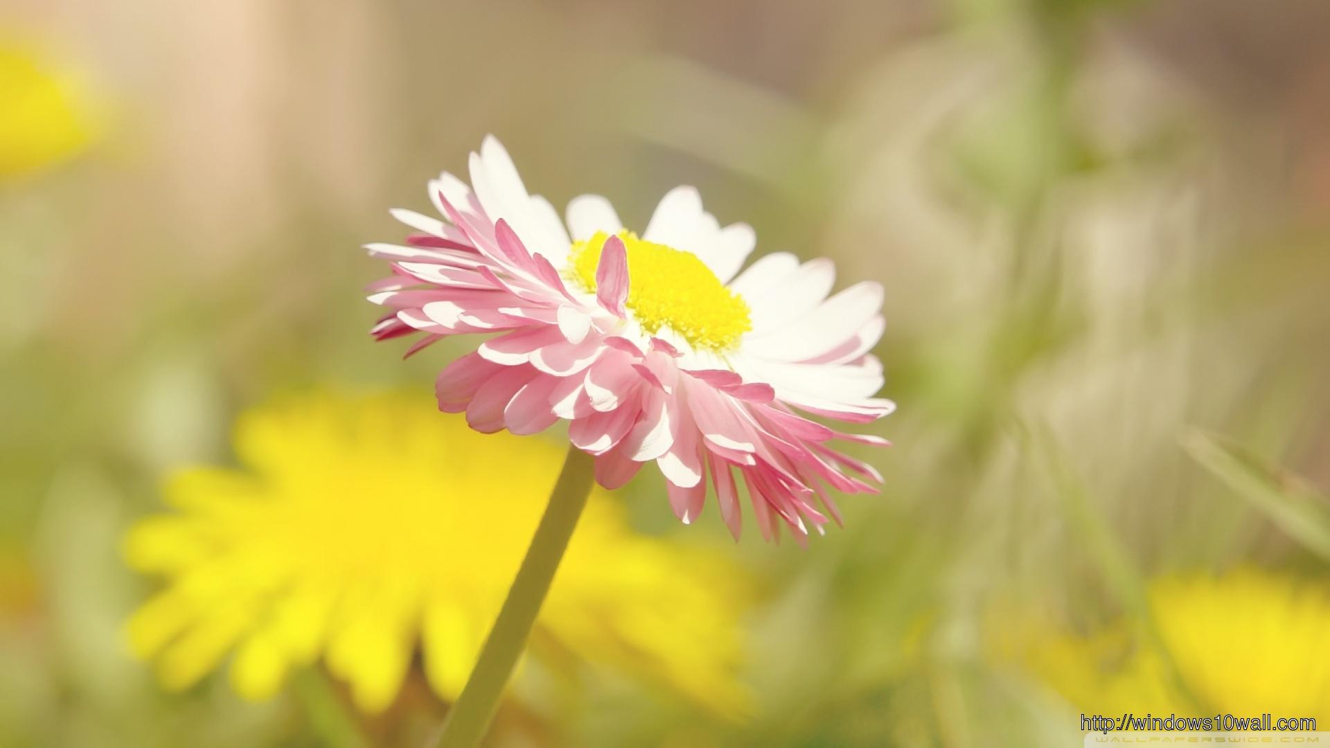 Beautiful Summer Flower Hd Wallpaper