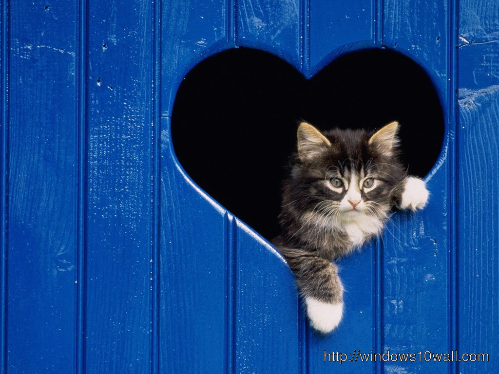 cat-in-heart-valentine-day-2014-Wallpaper