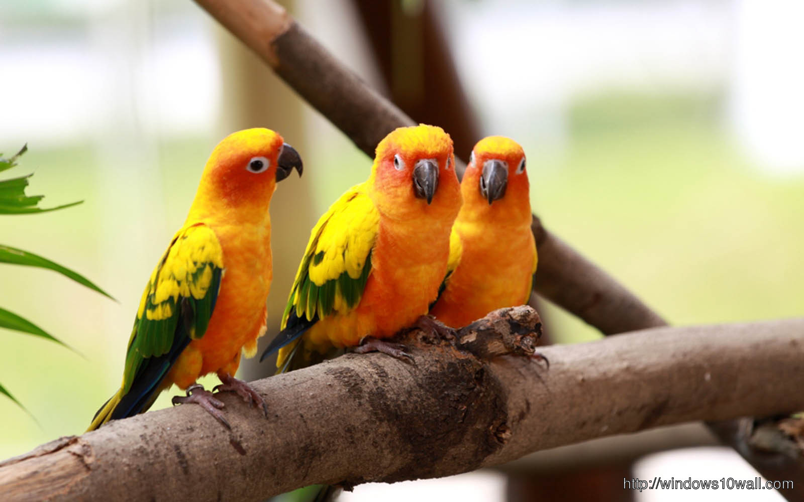 Love Birds Wallpaper In Hd : colorful Love Birds HD Free Wallpaper - windows 10 Wallpapers