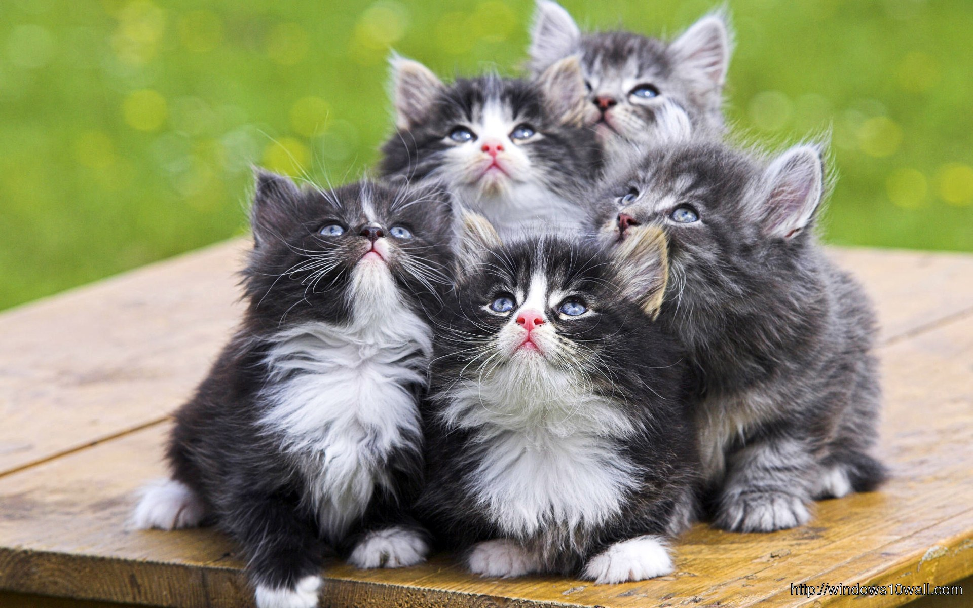 Cute Kittens Wallpaper