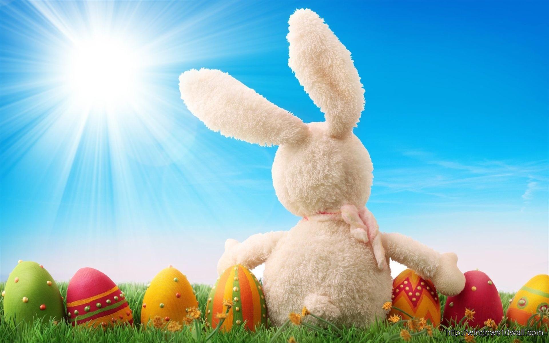 Easter Bunny Widescreen Hd Wallpaper Windows 10 Wallpapers