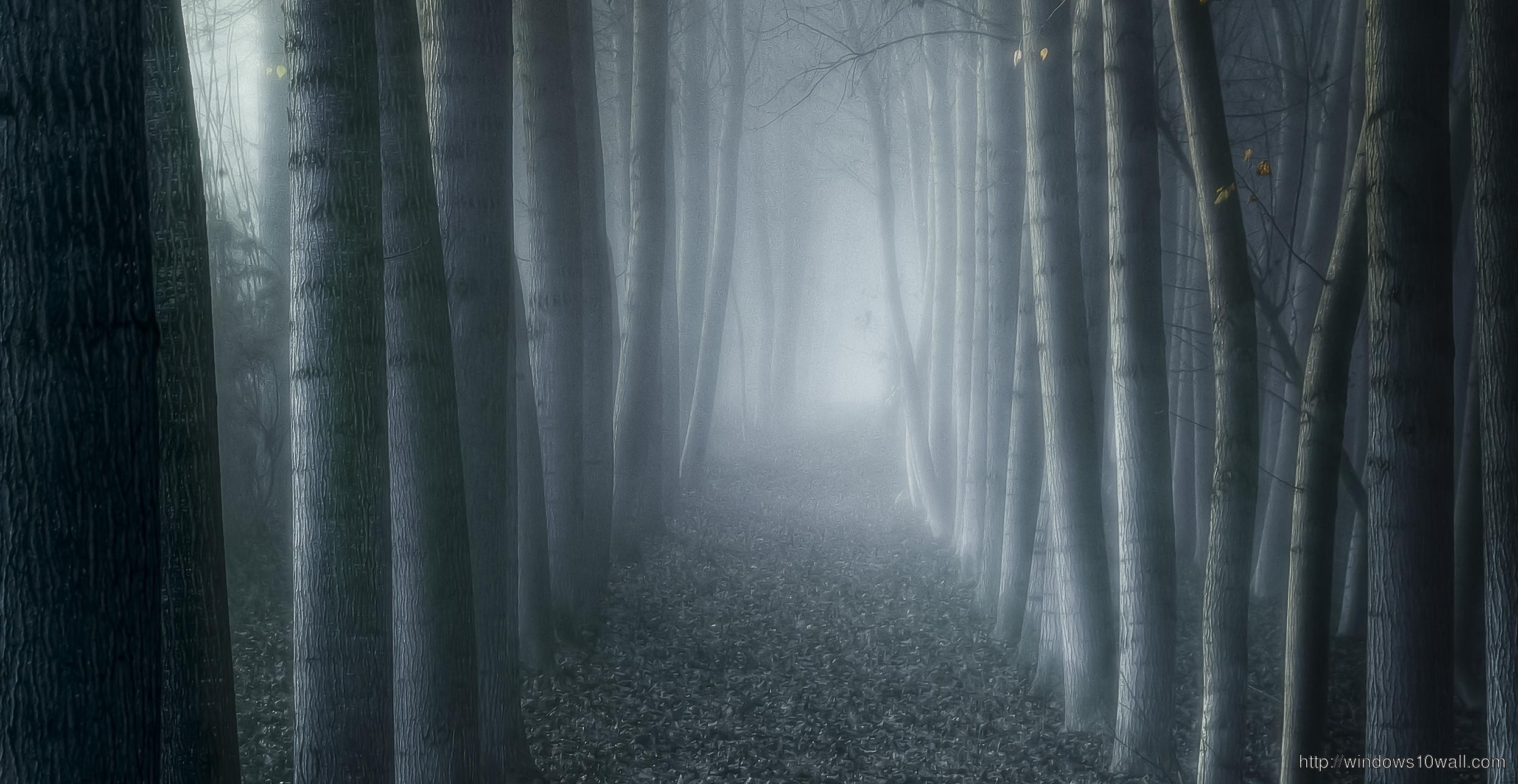 Dark Trees Hd Wallpapers: Landscapes Nature Trees Dark Forests Fog Hd Wallpaper