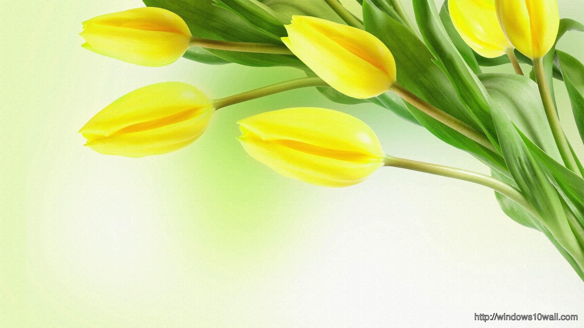 Springs Yellow Tulips Hd Wallpaper Windows 10 Wallpapers