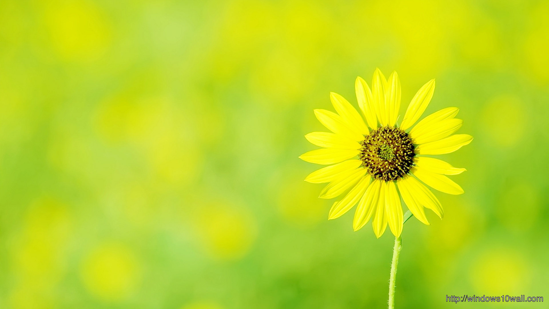 Yellow Flower Hd Top Wallpaper Windows 10 Wallpapers