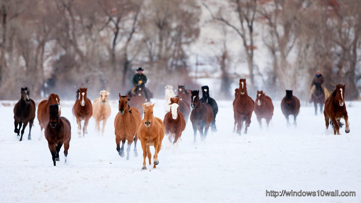 American Quarter Horses In The Winter Wallpaper Windows