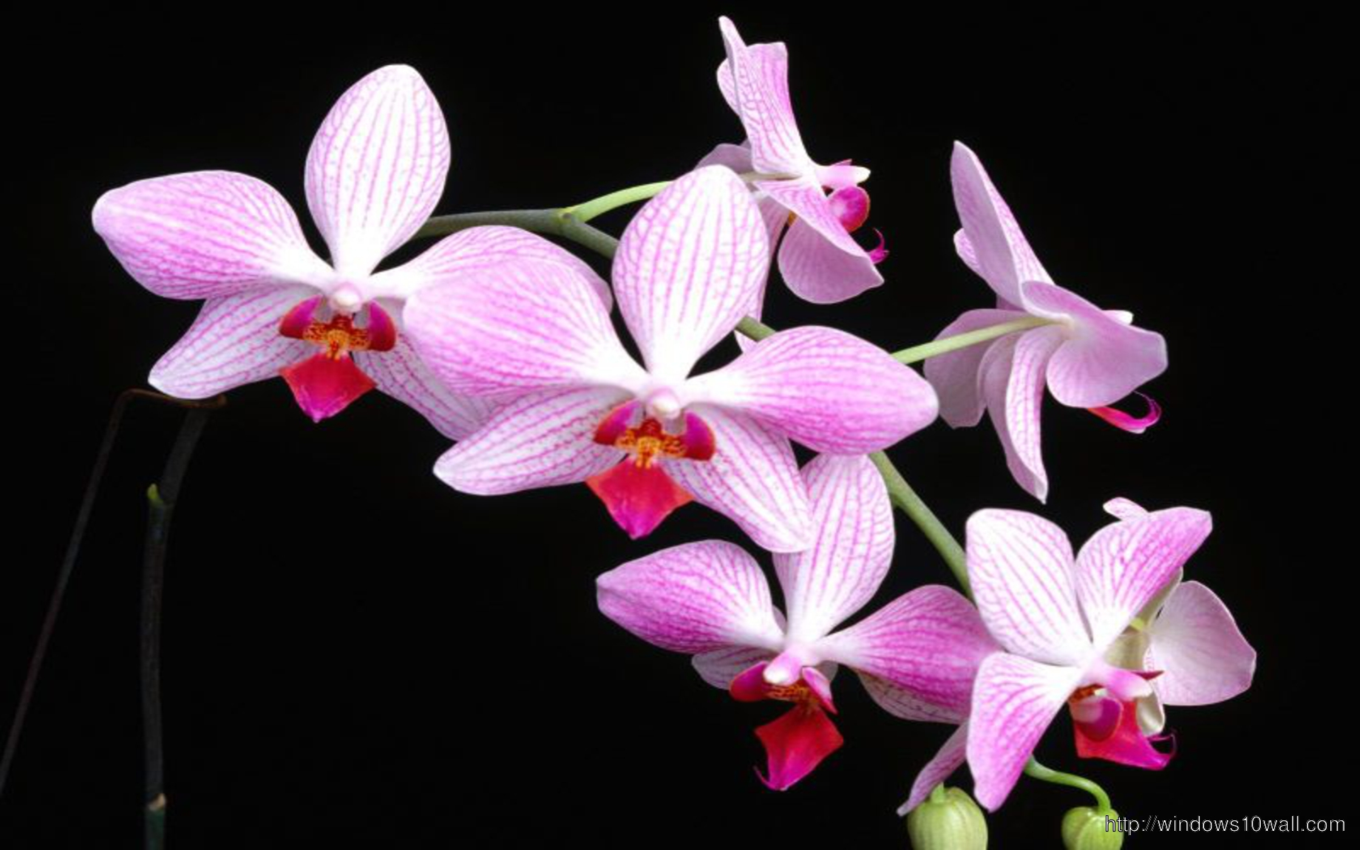 Cliserpudo beautiful orchid flower wallpaper images beautiful orchid flower wallpaper izmirmasajfo