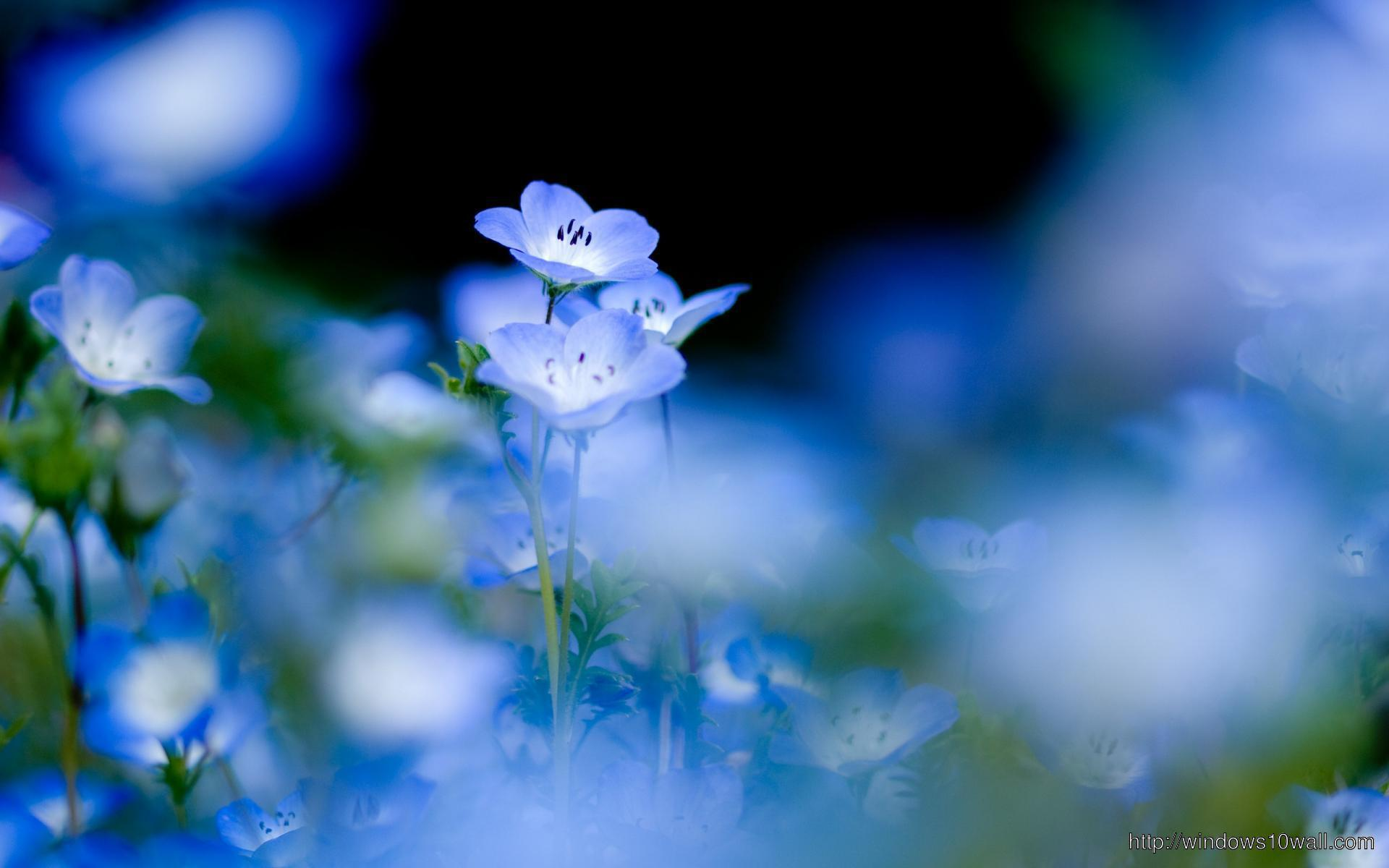 Blue Flower Background Windows 10 Wallpapers
