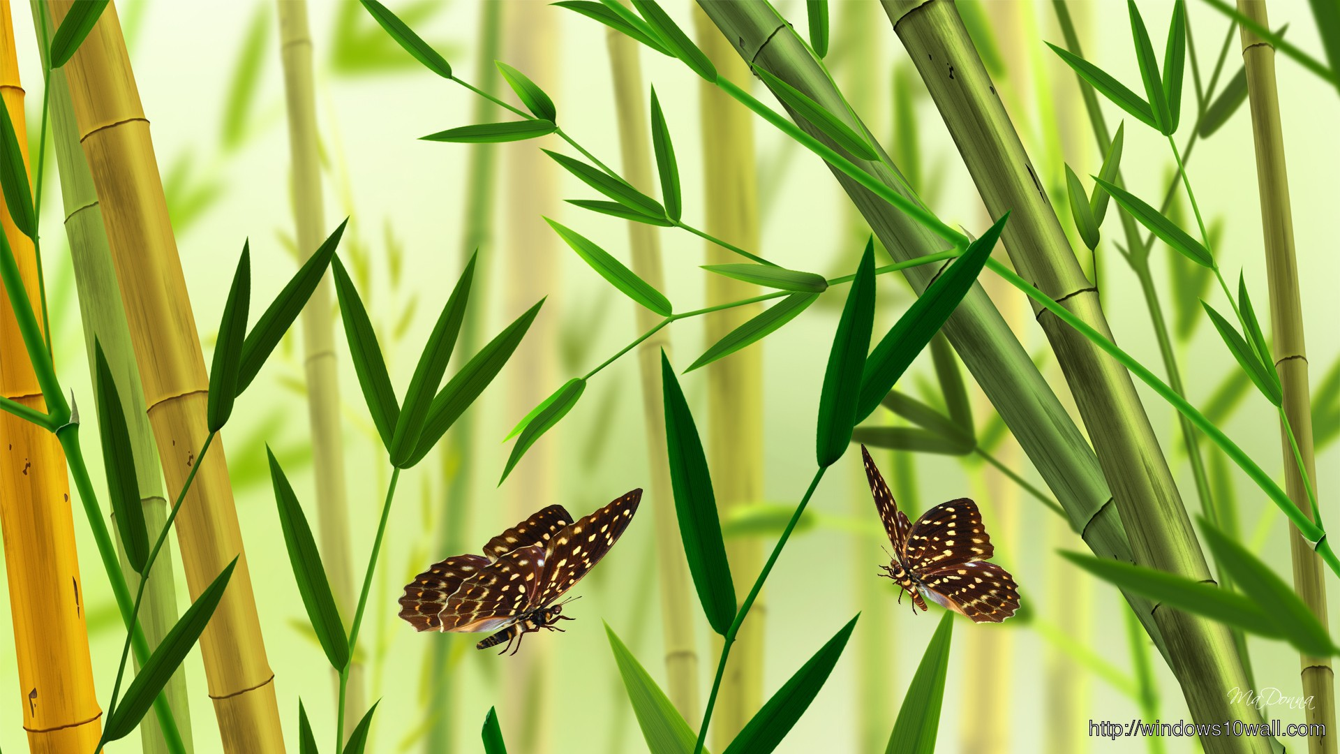 Nature-Butterfly-Bamboo