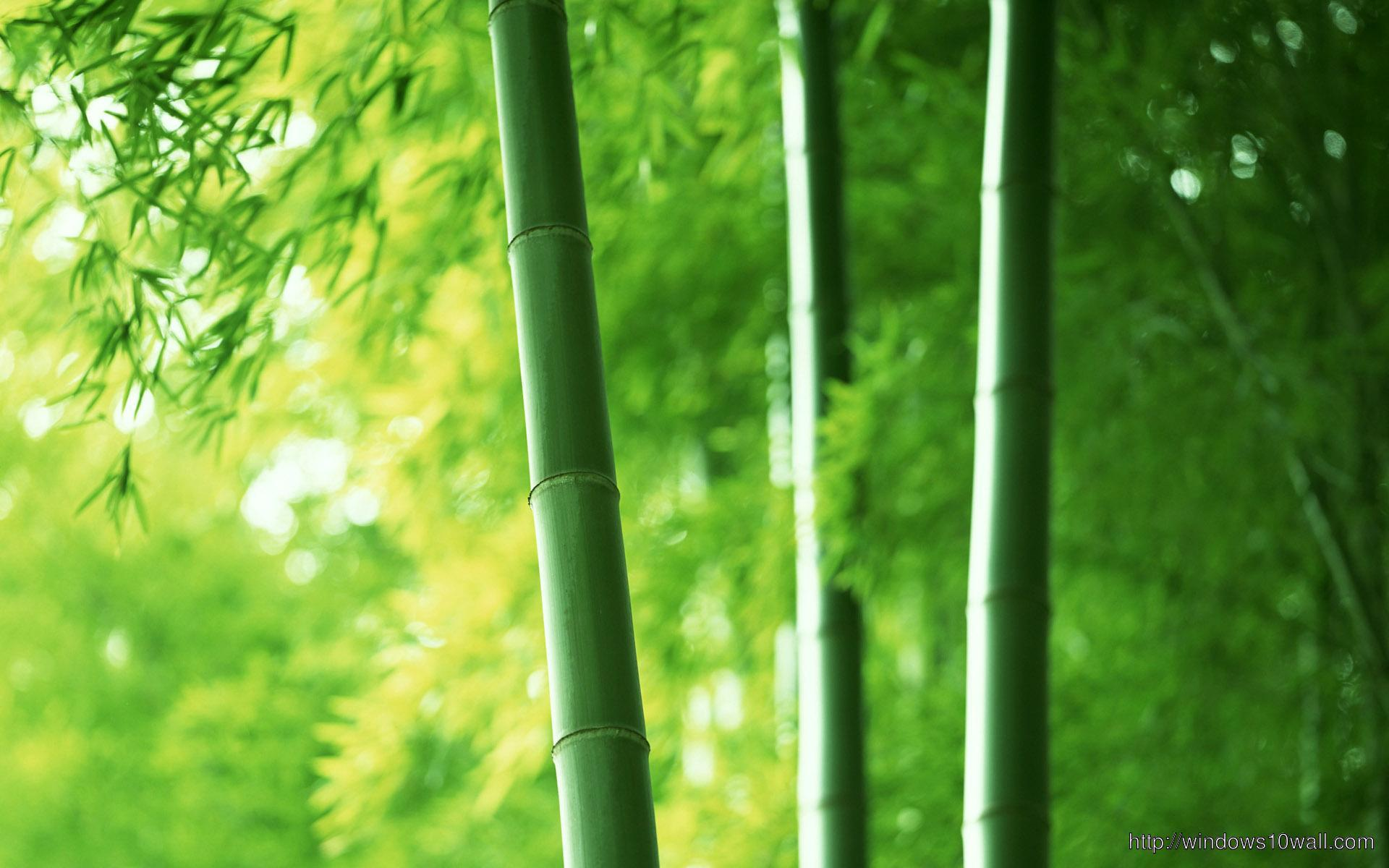 Nature-Green-Bamboo