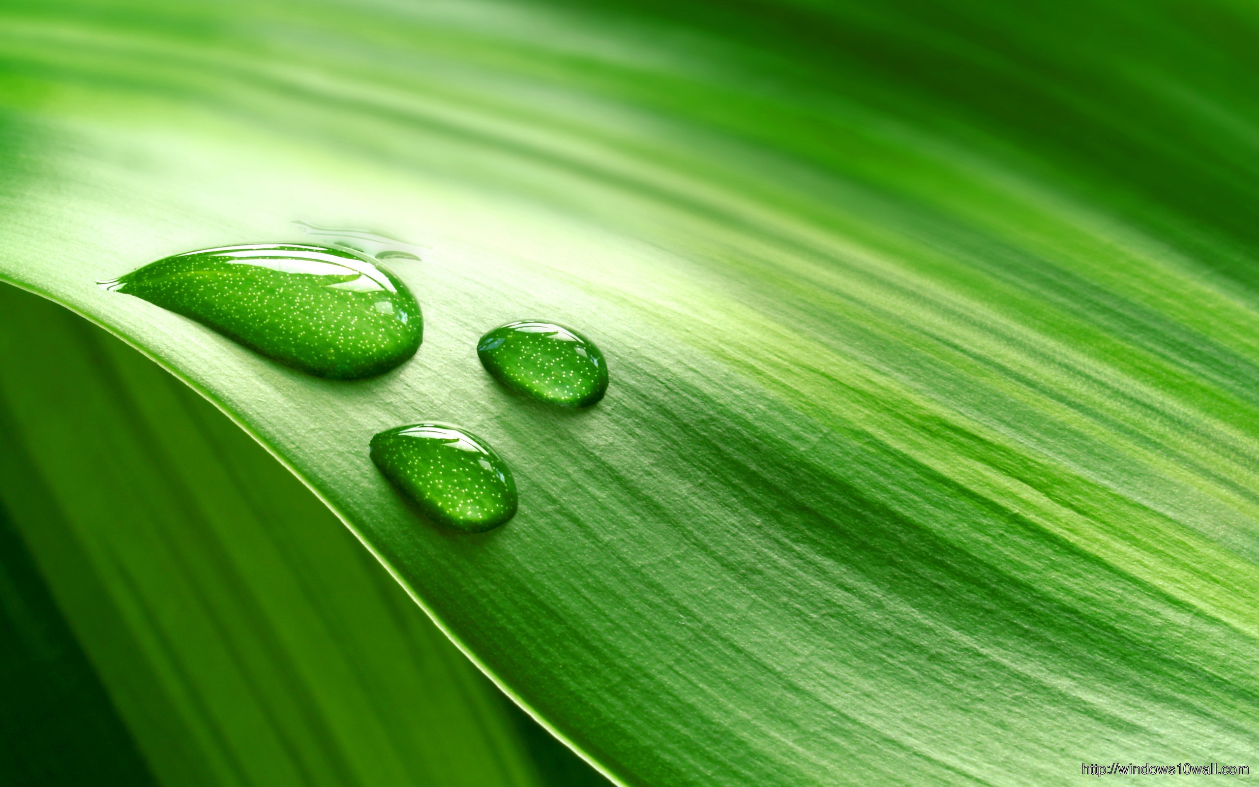 Nature-Green-Dew-On-Leaf