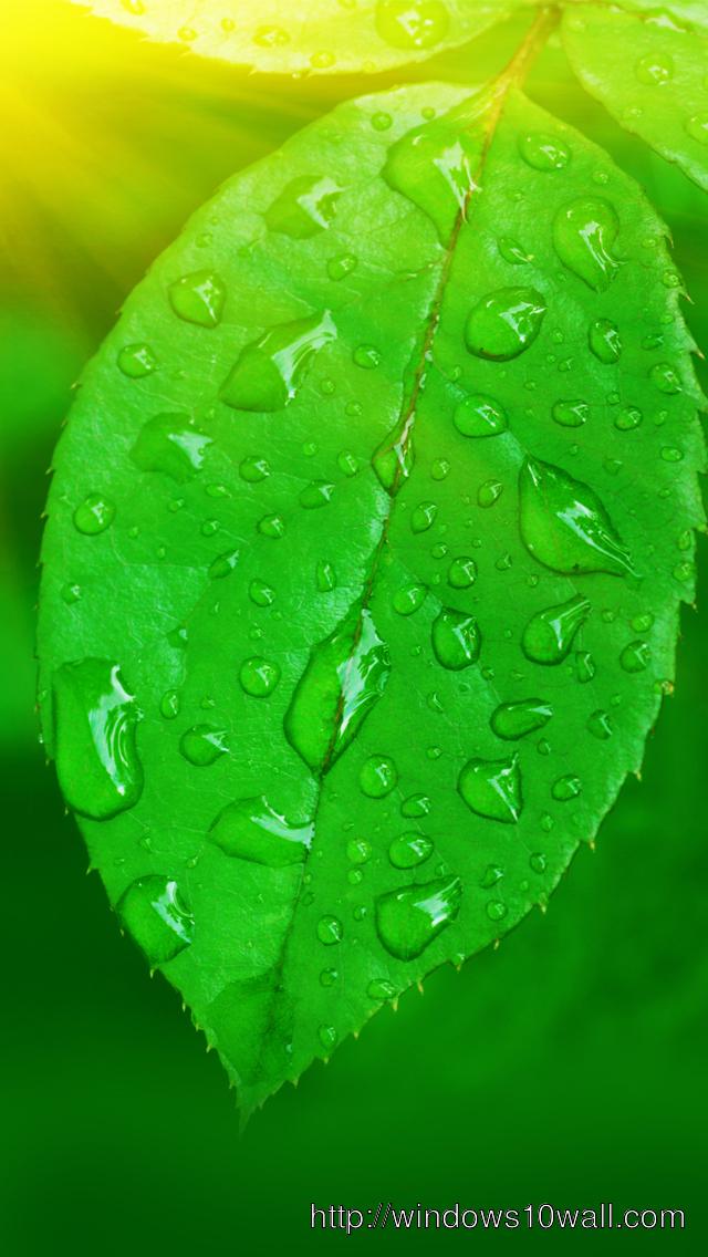 Nature-Green-Leaf-Iphone-5-hd-wallpaper