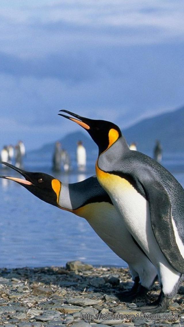 Penguins-Iphone-5-hd-wallpaper