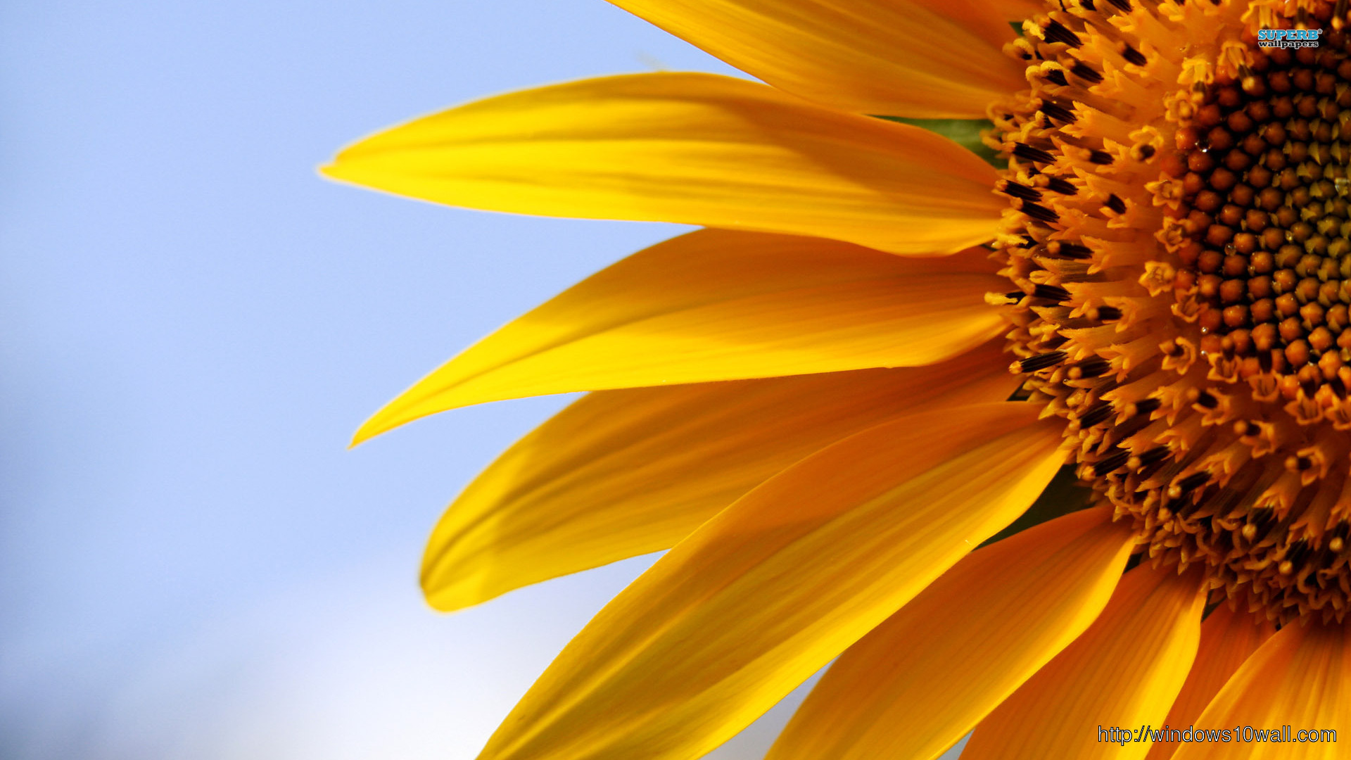 Sunflower Picture Windows 10 Wallpapers