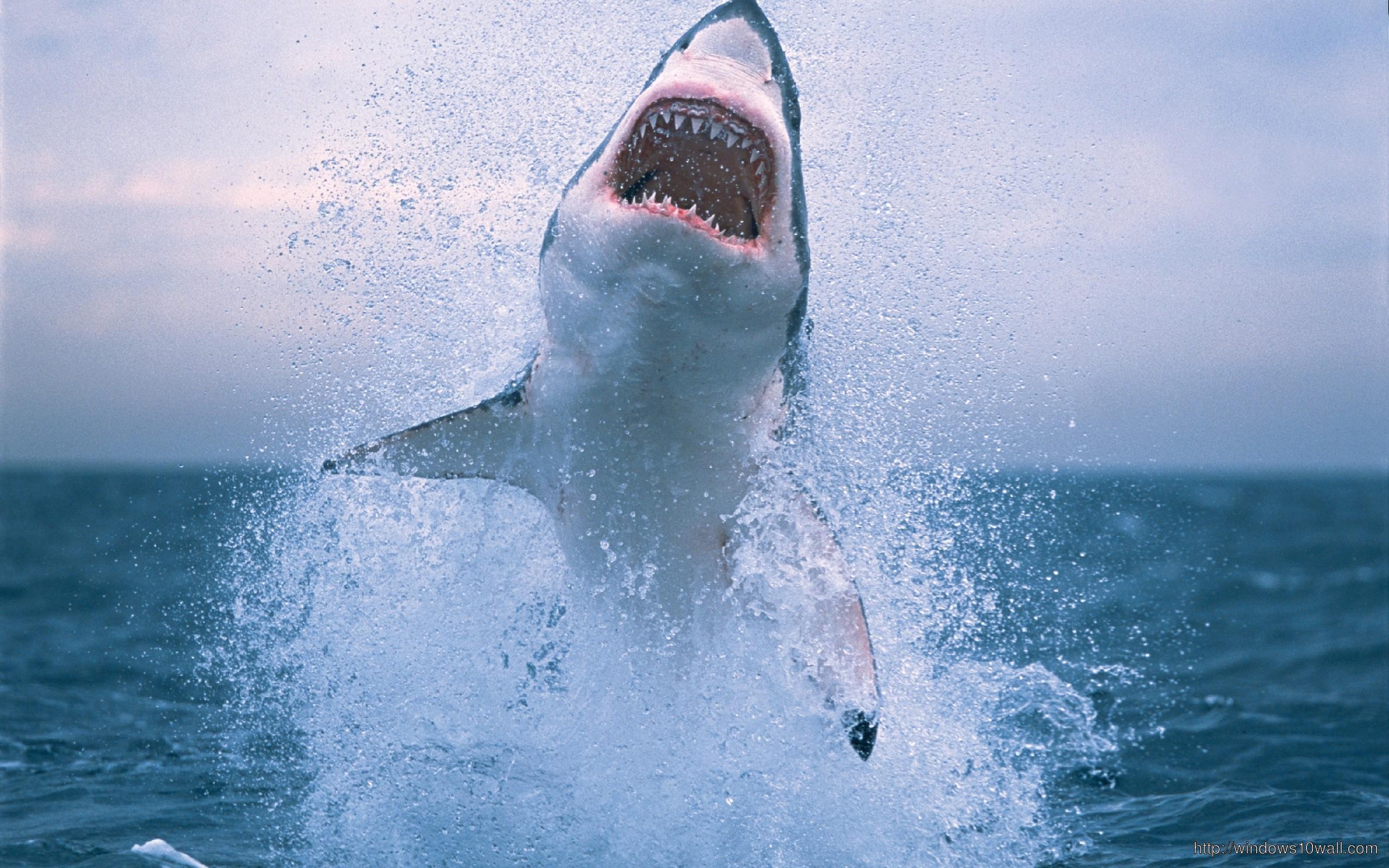 amazing-shark-wallpaper