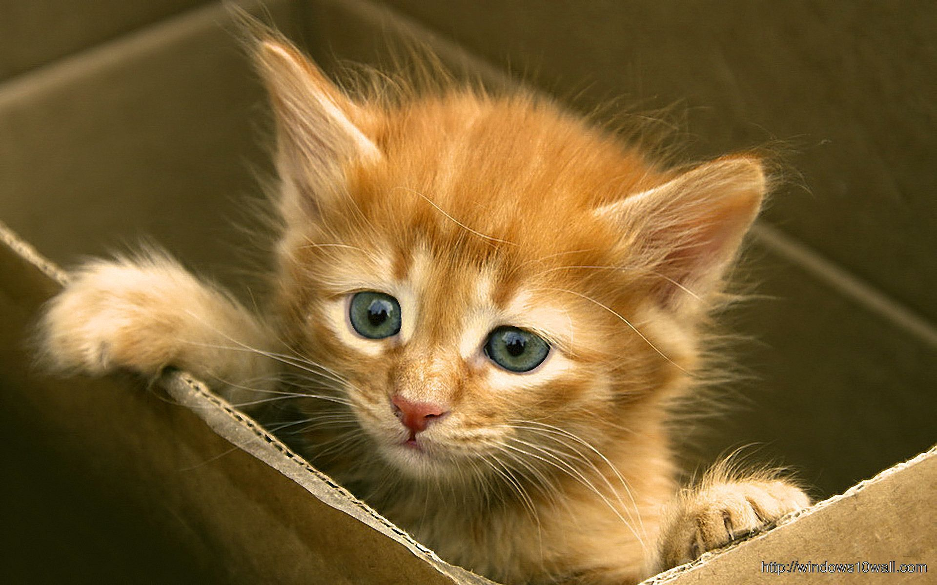 Animal Cute Kitty Wallpaper
