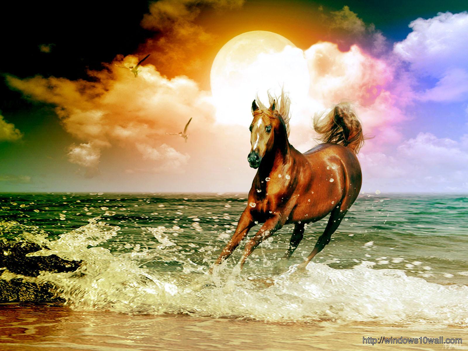 Arabian Racehorse On The Beach Wallpaper