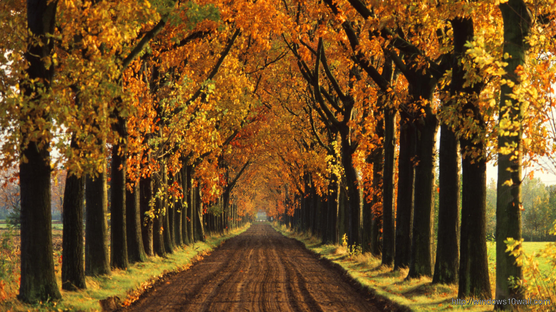 Autumn Tree Street Wallpaper