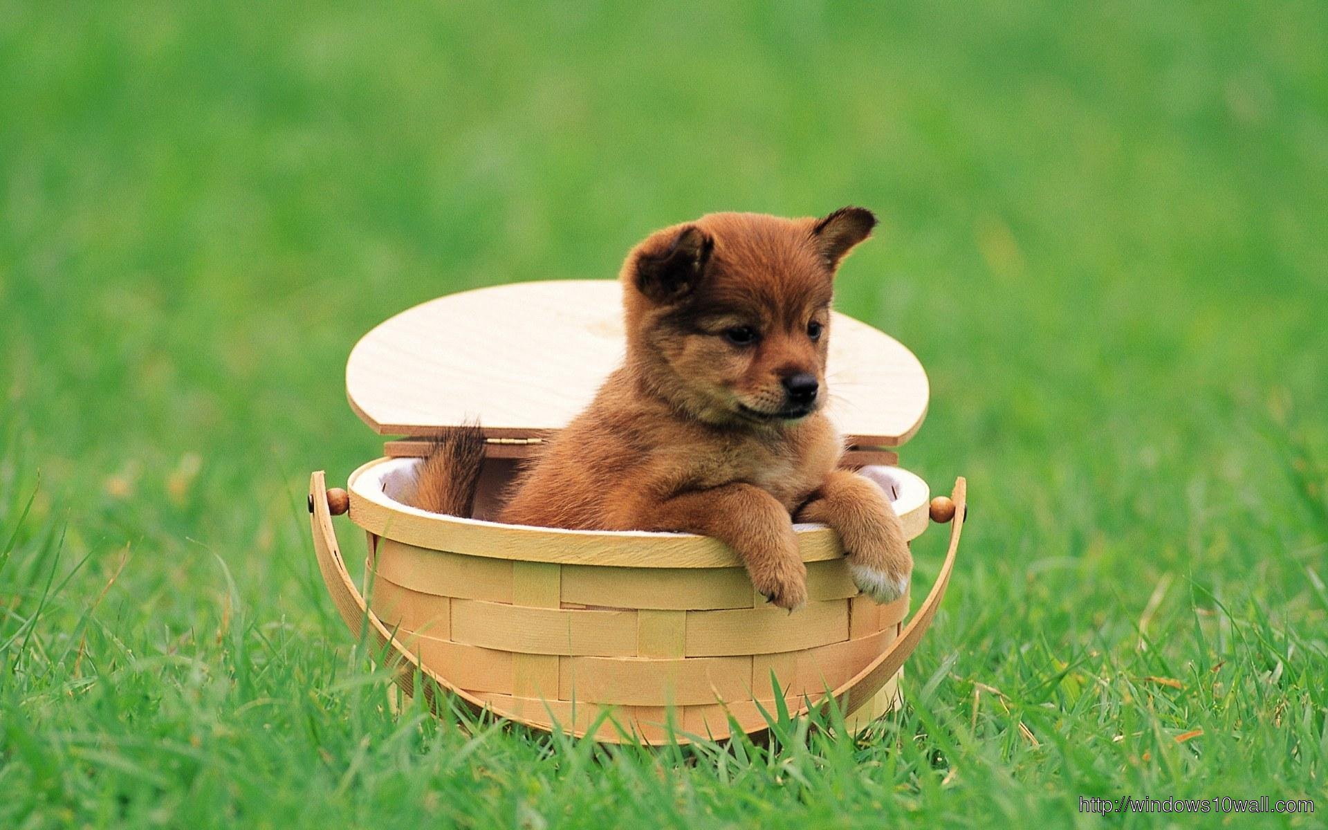 Baby Dog In Basket Wallpaper