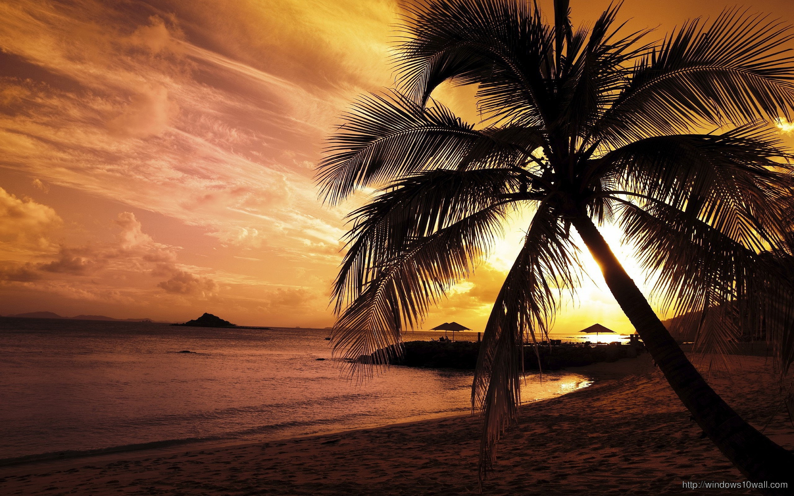 Can palm tree beach sunset remarkable