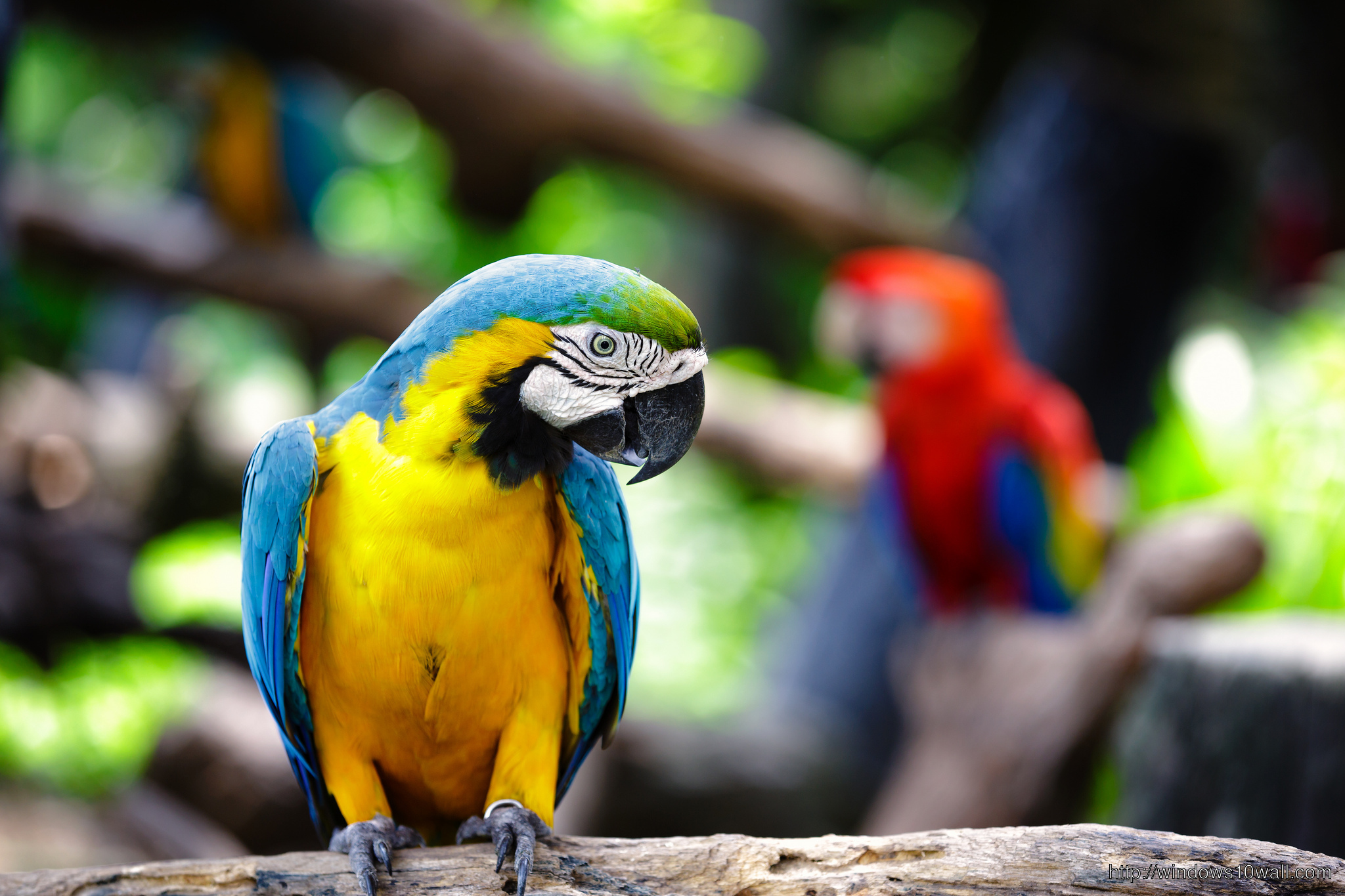 Beautiful Bird Macaw Wallpaper