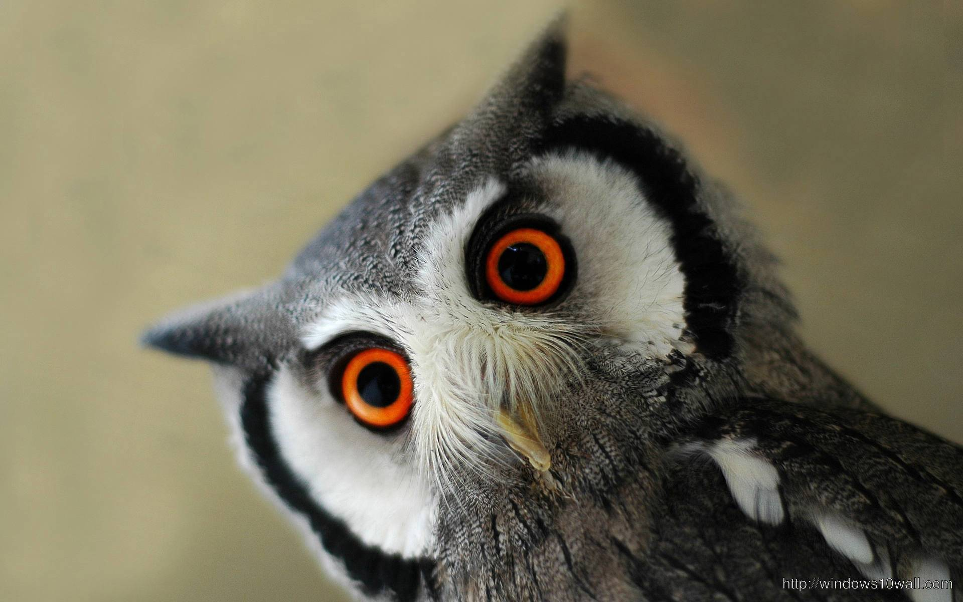 Beautiful Eyes Owl Wallpaper
