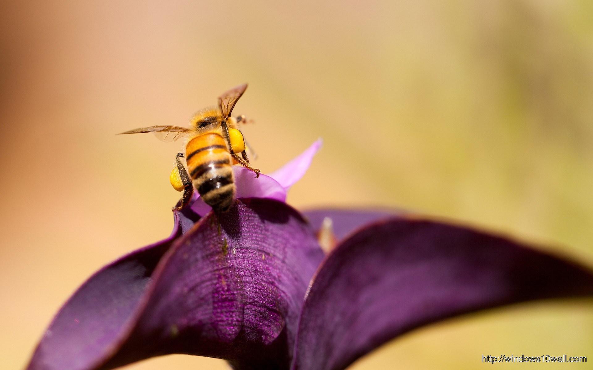 bee-in-purple-flower-wallpaper