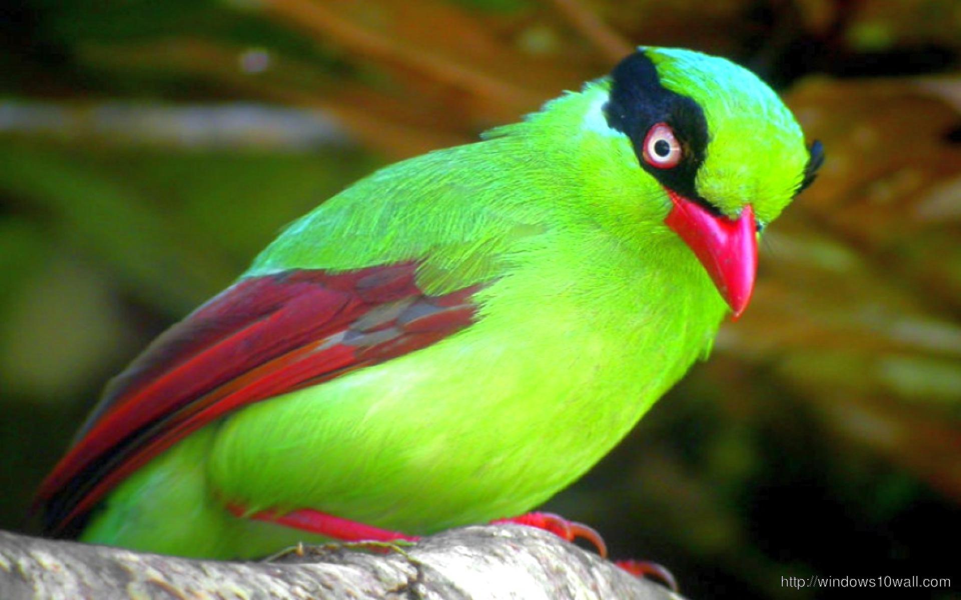 bird-green-beautiful-wallpaper