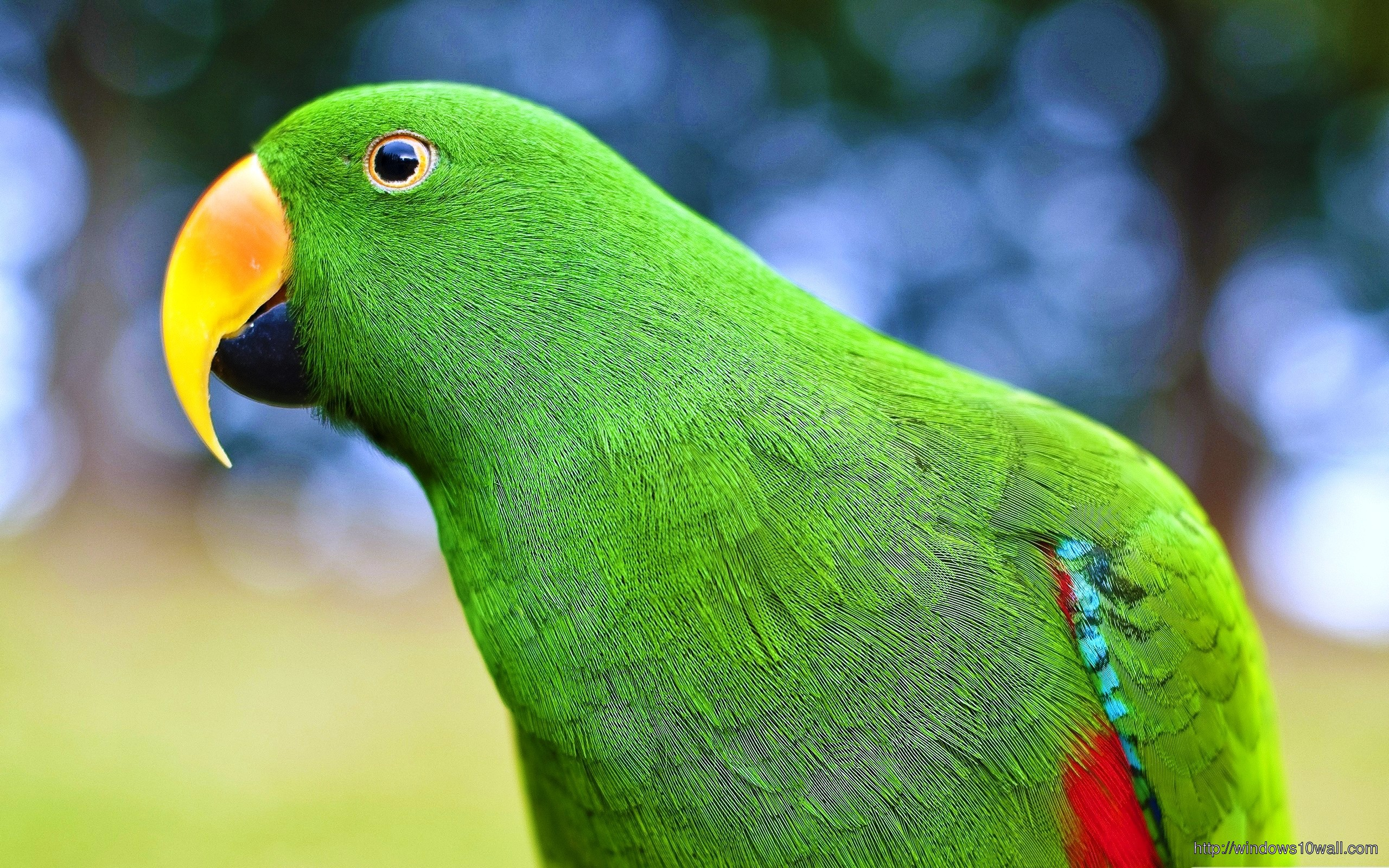 Birds Parrots Green Wallpaper