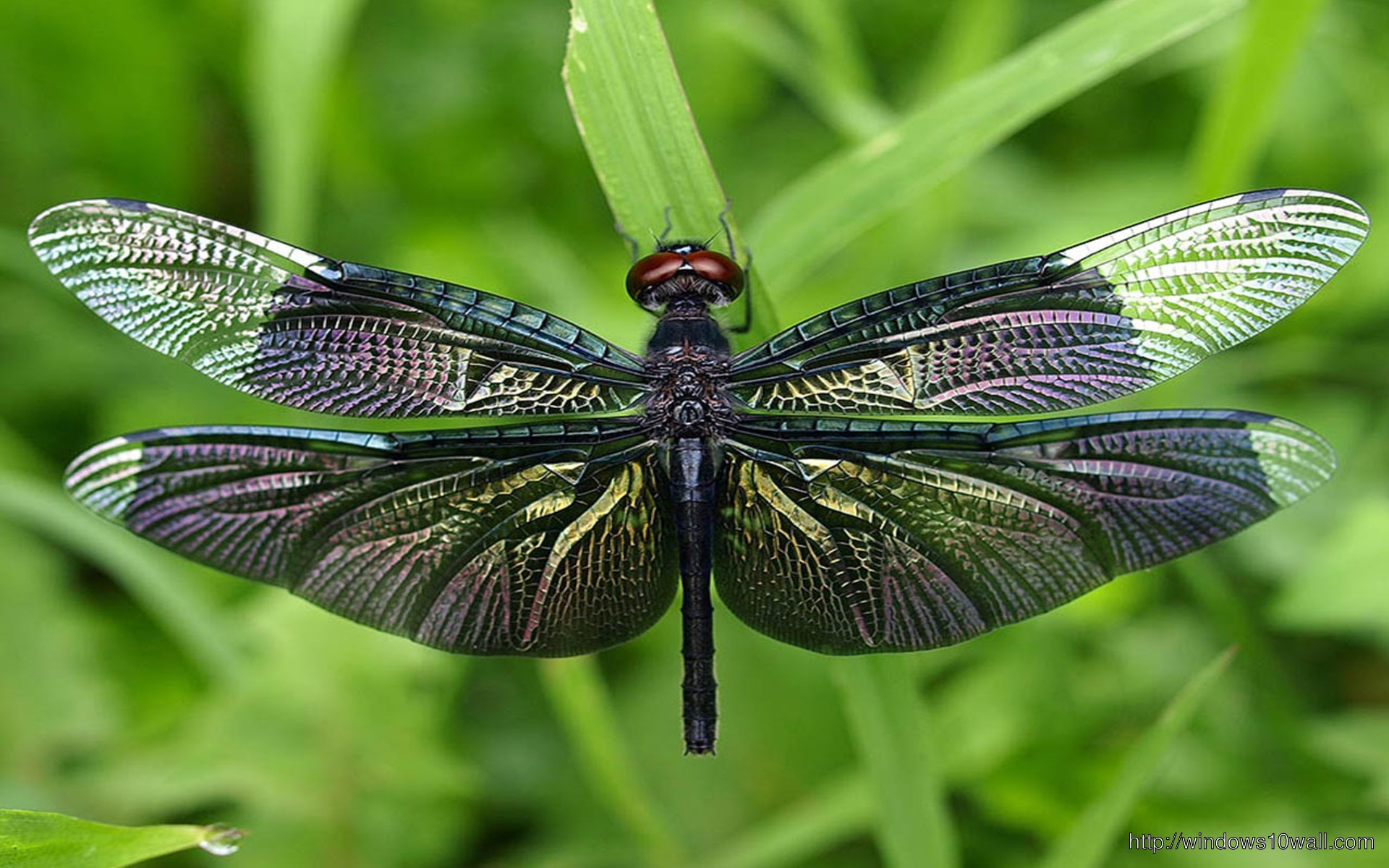 black-dragonfly-wallpaper