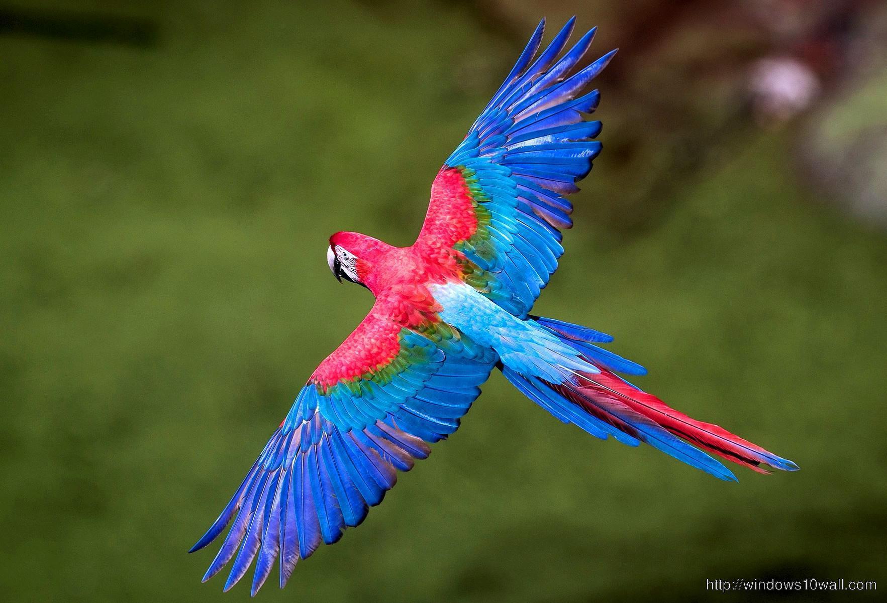 blue-birds-flying-wallpaper