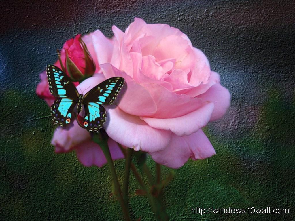 butterfly-glow-wallpaper
