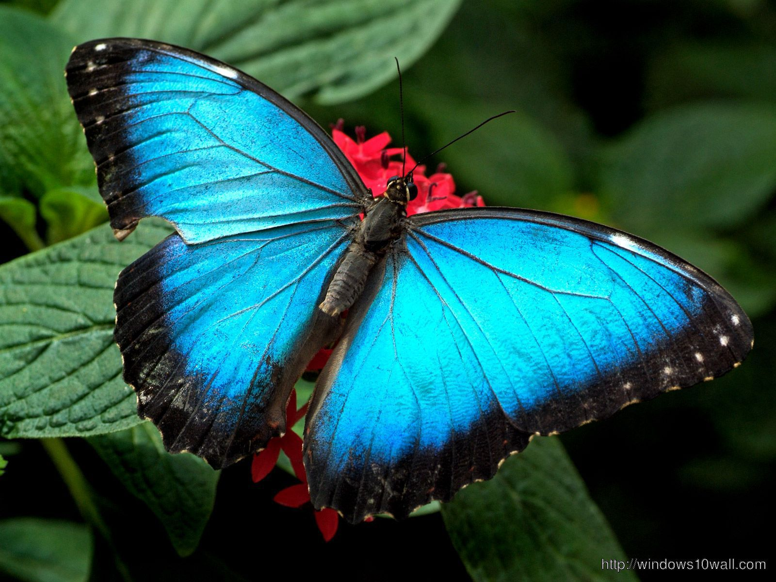 latest wallpapers of butterflies - photo #13