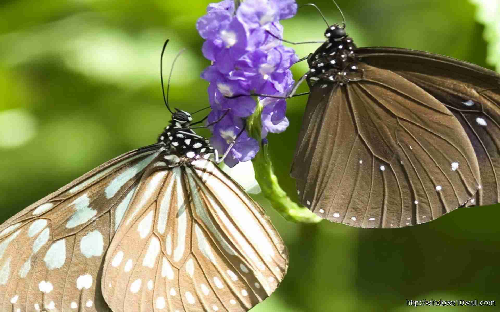 butterfly-purple-flower-wallpaper