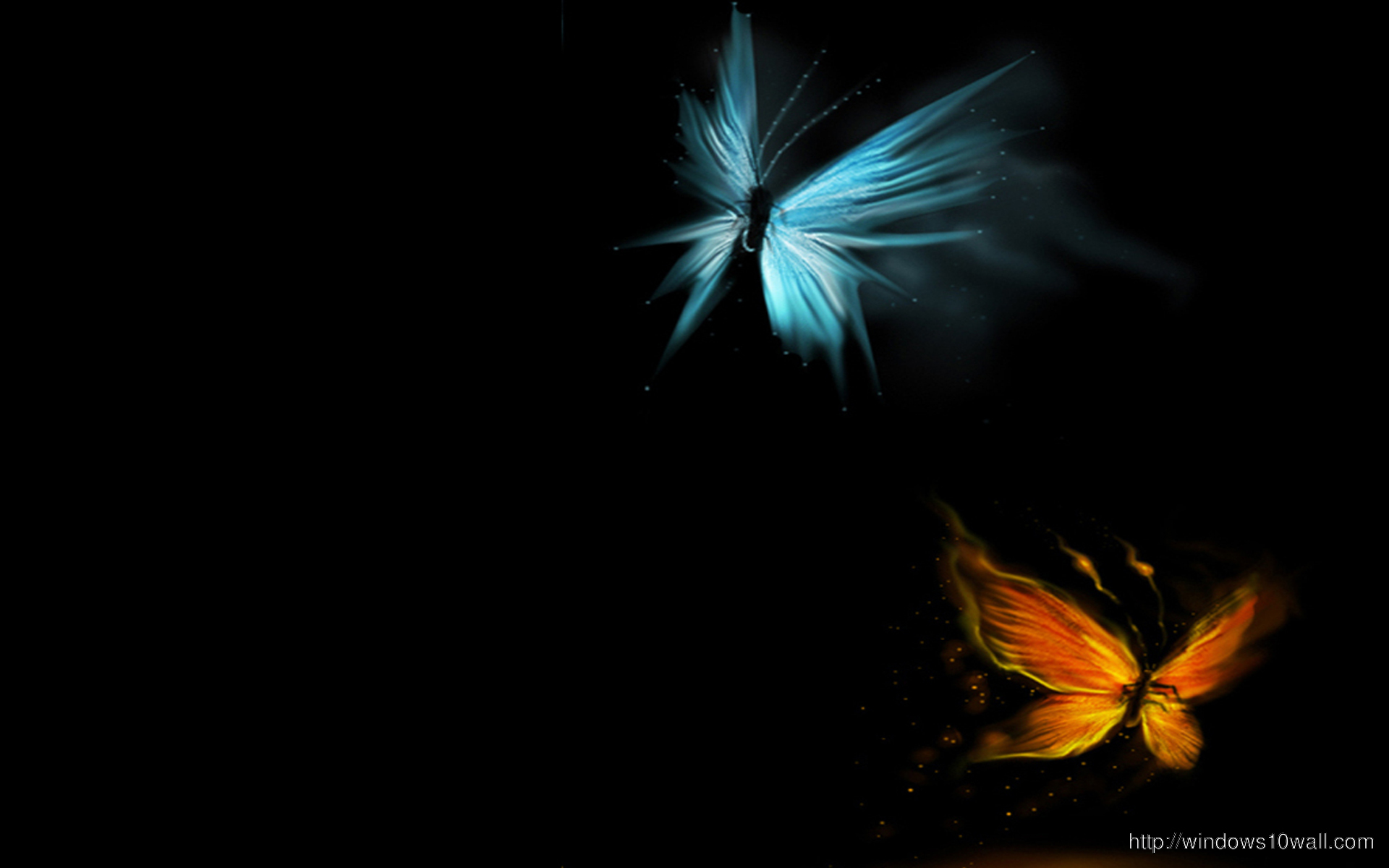 butterfly-wallpaper-in-hd