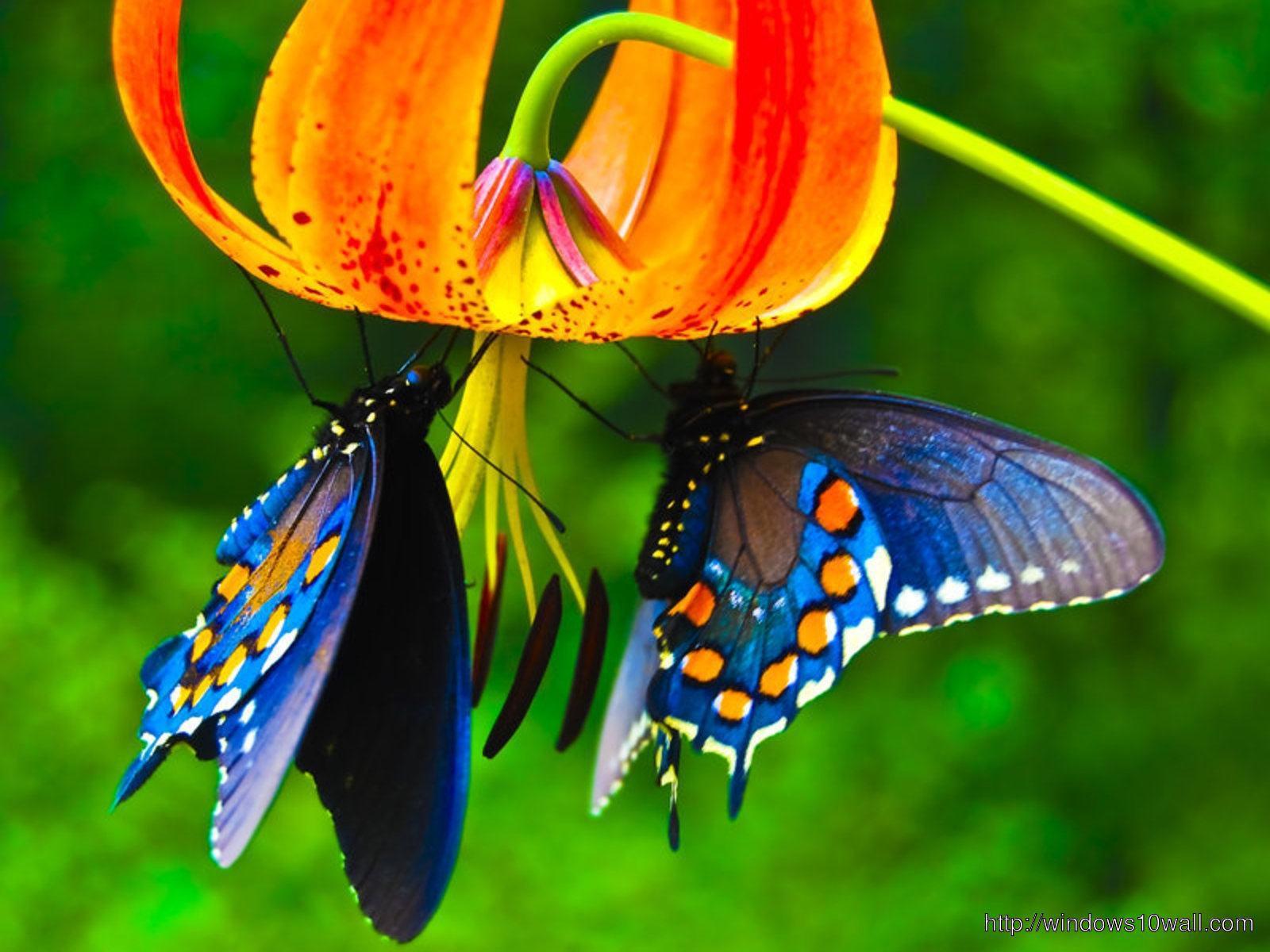 Butterfly Wallpaper Windows 7 Windows 10 Wallpapers