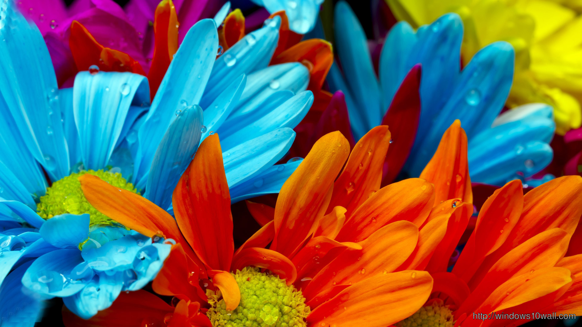 colorful flower wallpapers hd