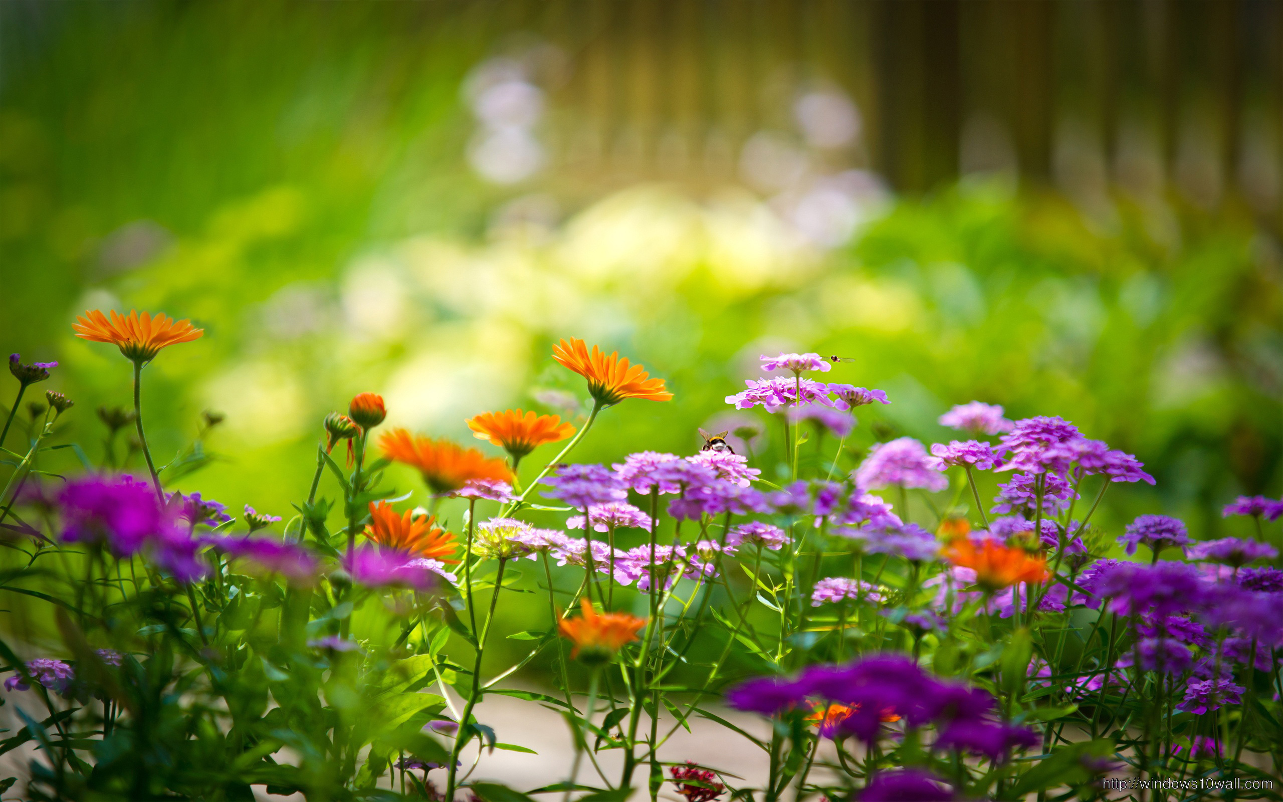 colorful flowers in garden wallpapers hd
