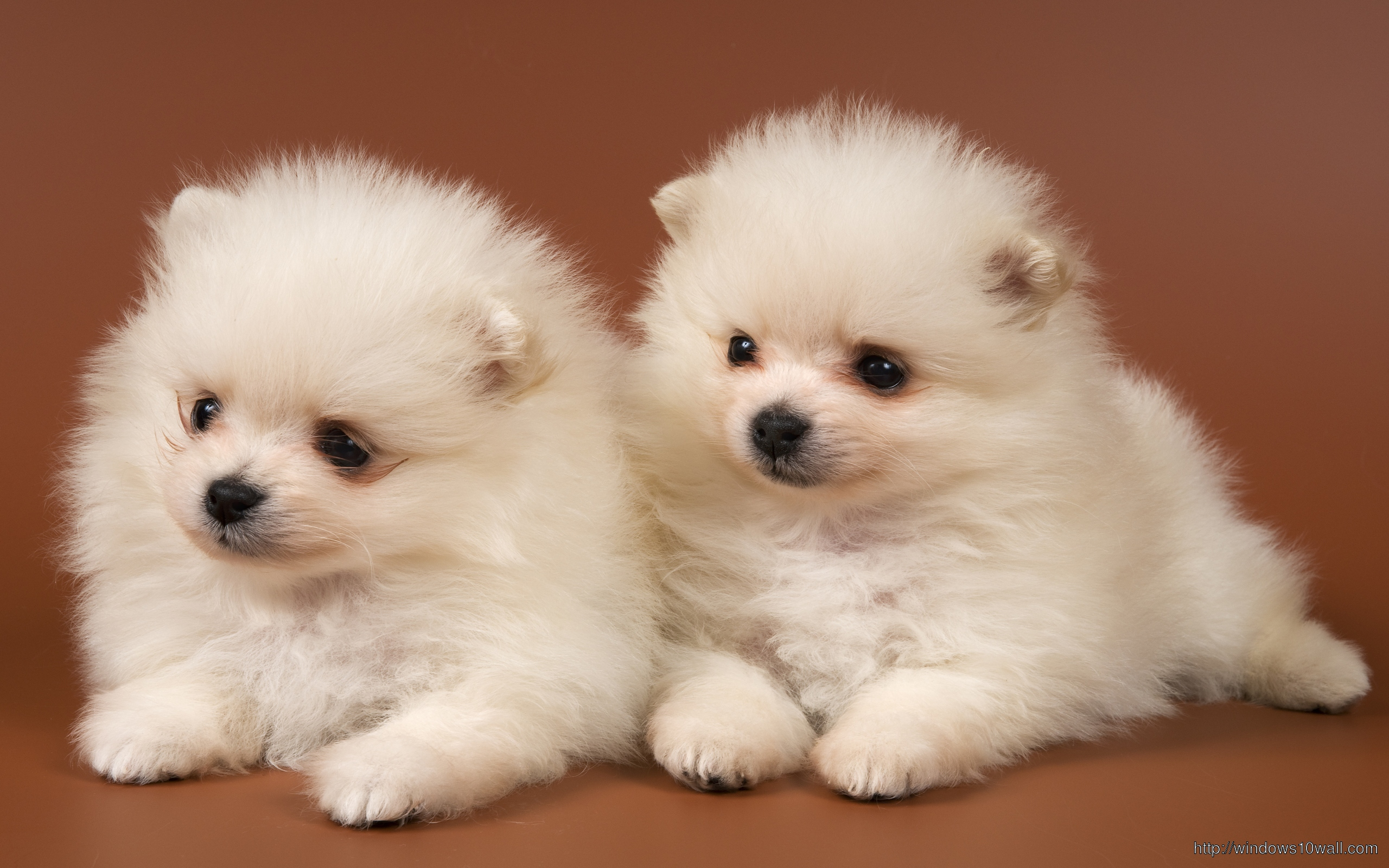 cute-baby-dogs-wallpaper
