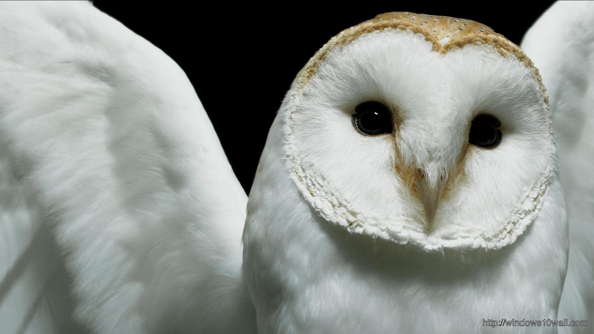 Cute White Owl Bird Wallpaper