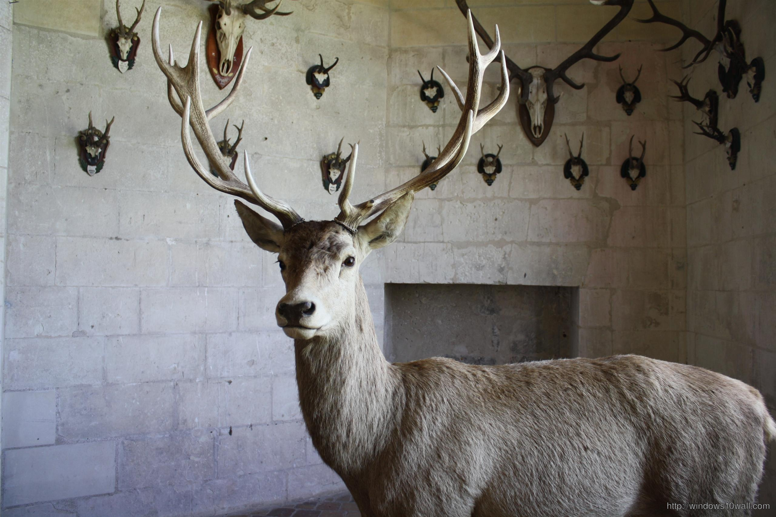 Deer For Home Wallpaper
