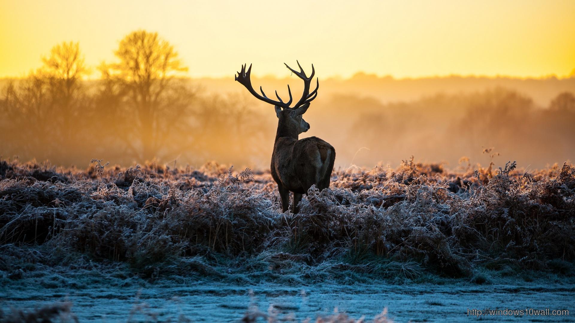 deer-for-iphone-5-wallpaper