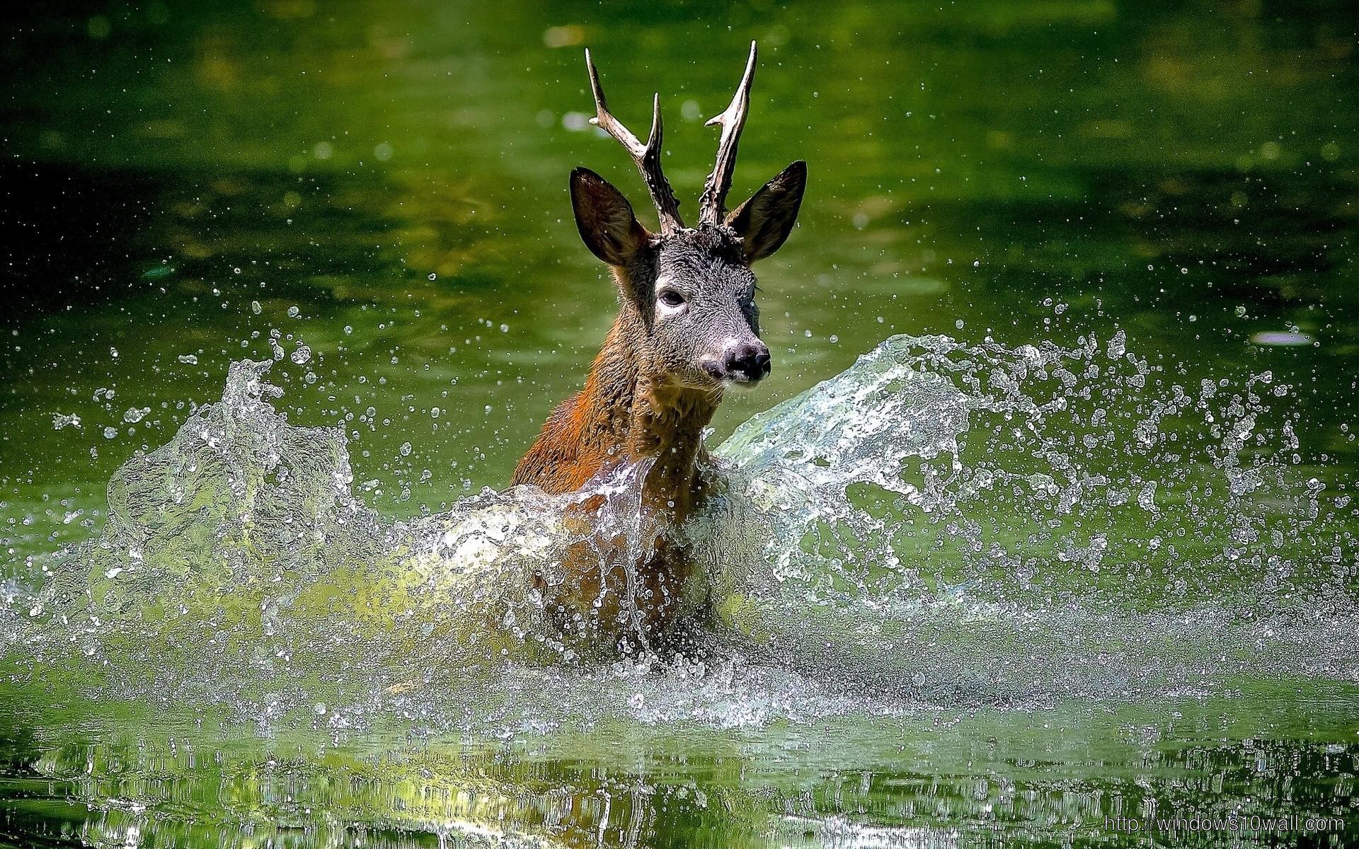 Deer In River Water Splash Wallpaper