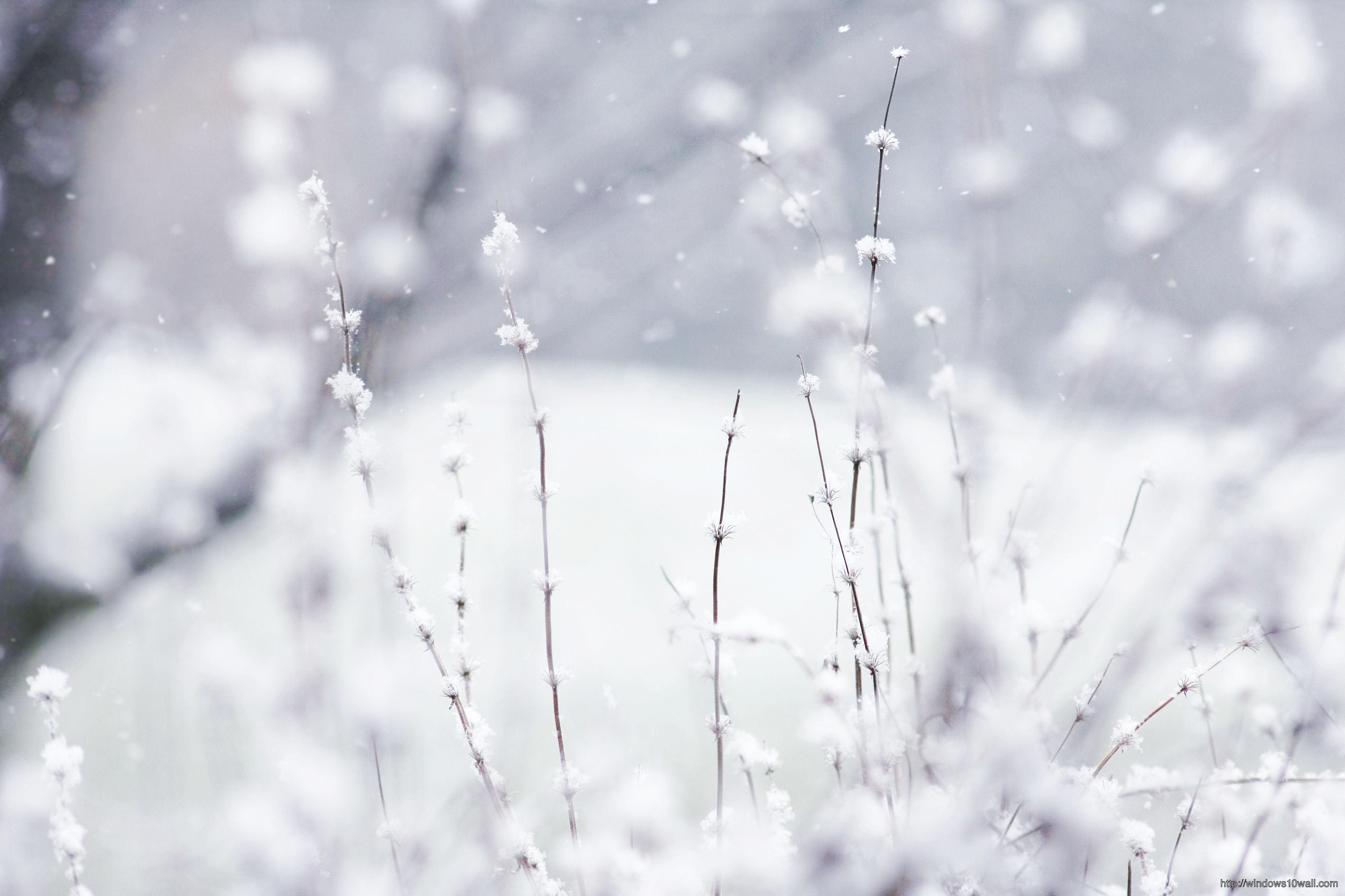 Desktop Backgrounds For Windows 10 Winter