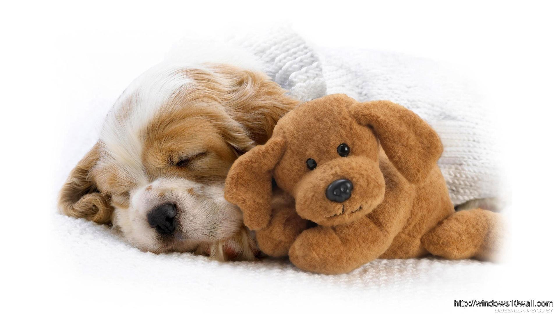 dog-wallpaper-cute