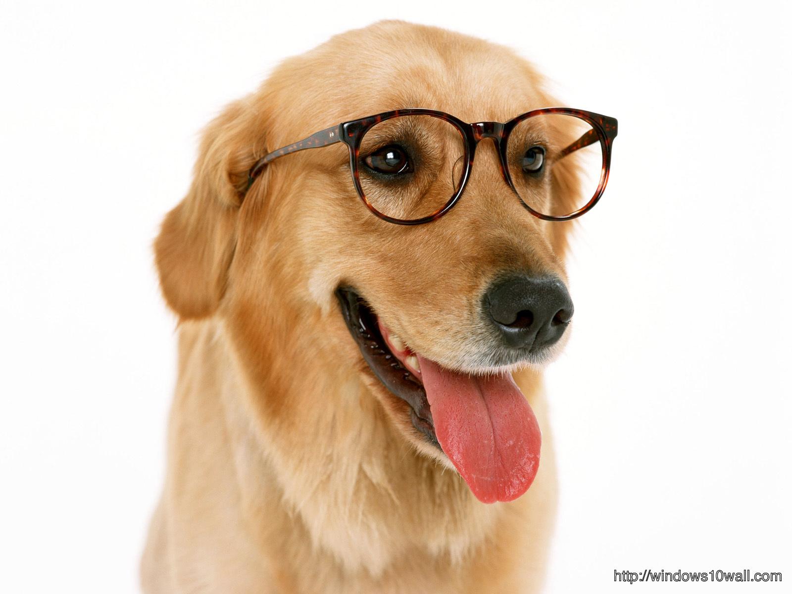 Dog Windows 10 Wallpapers