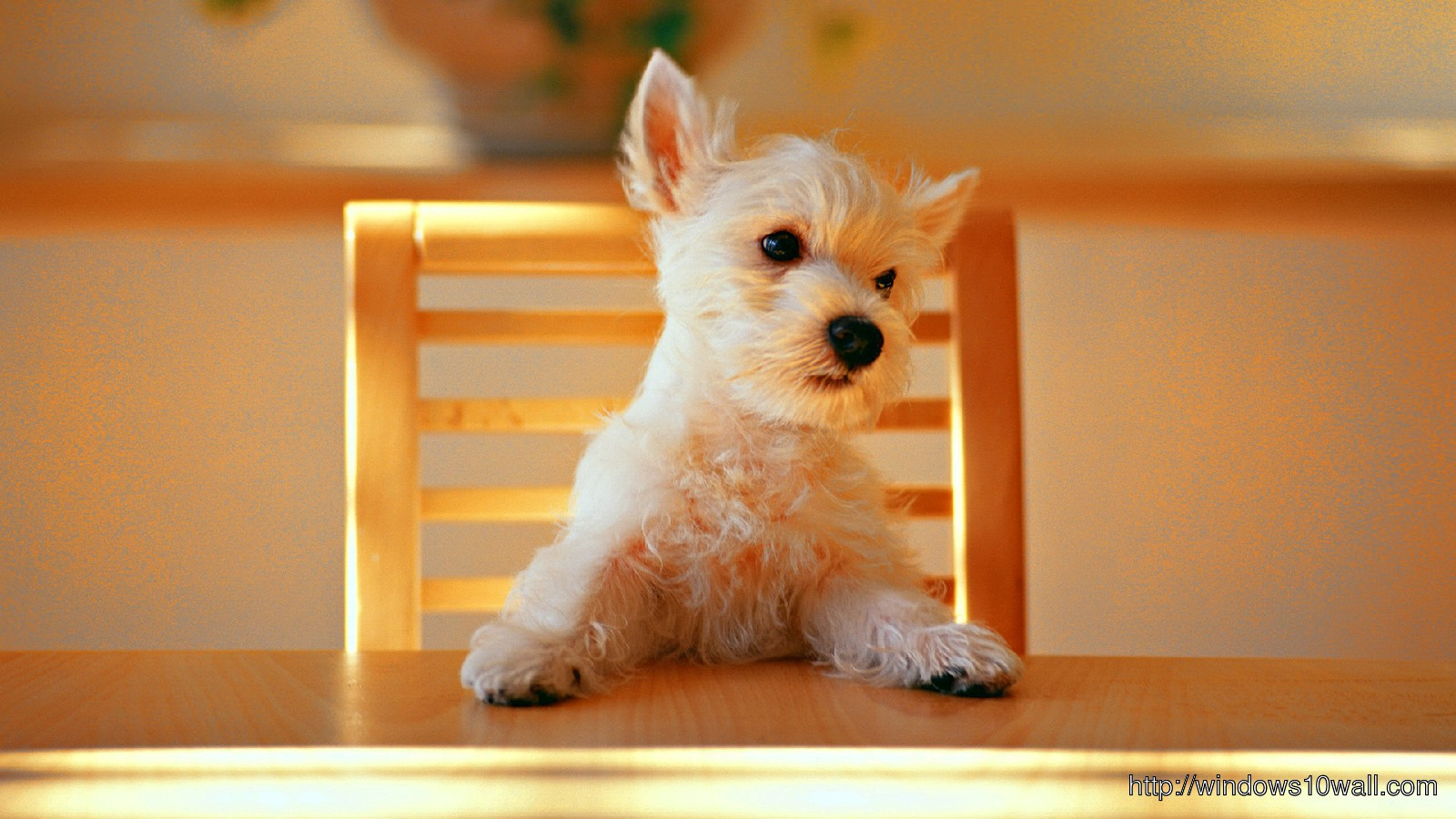 Dog Wallpaper Free Download