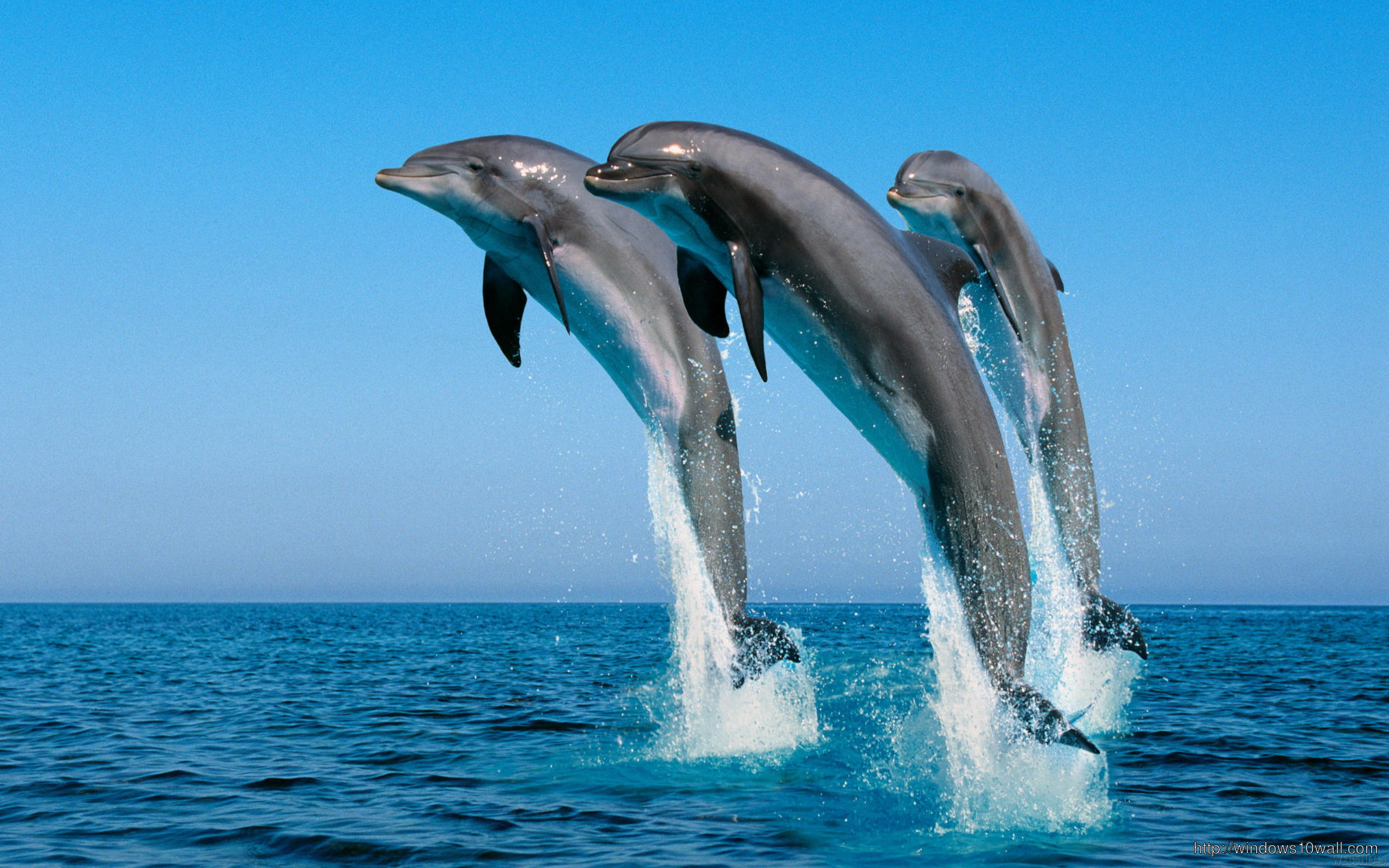 Dolphins Jumping In The Air Wallpaper