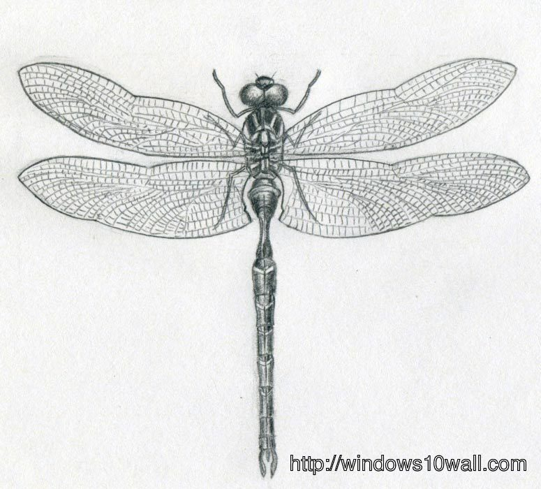 Dragonfly Drawings ideas