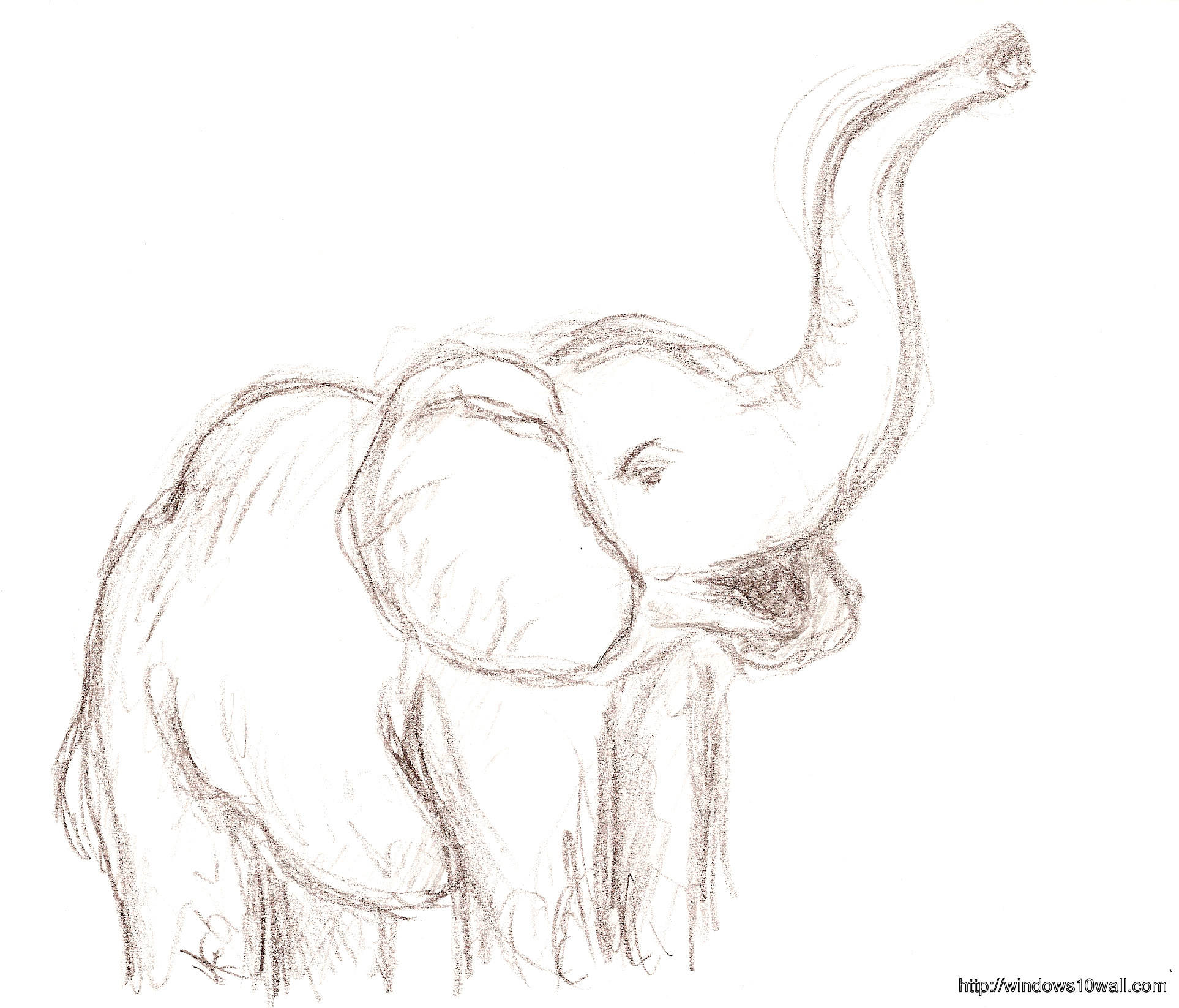 Elephant Drawings Ideas Wallpaper