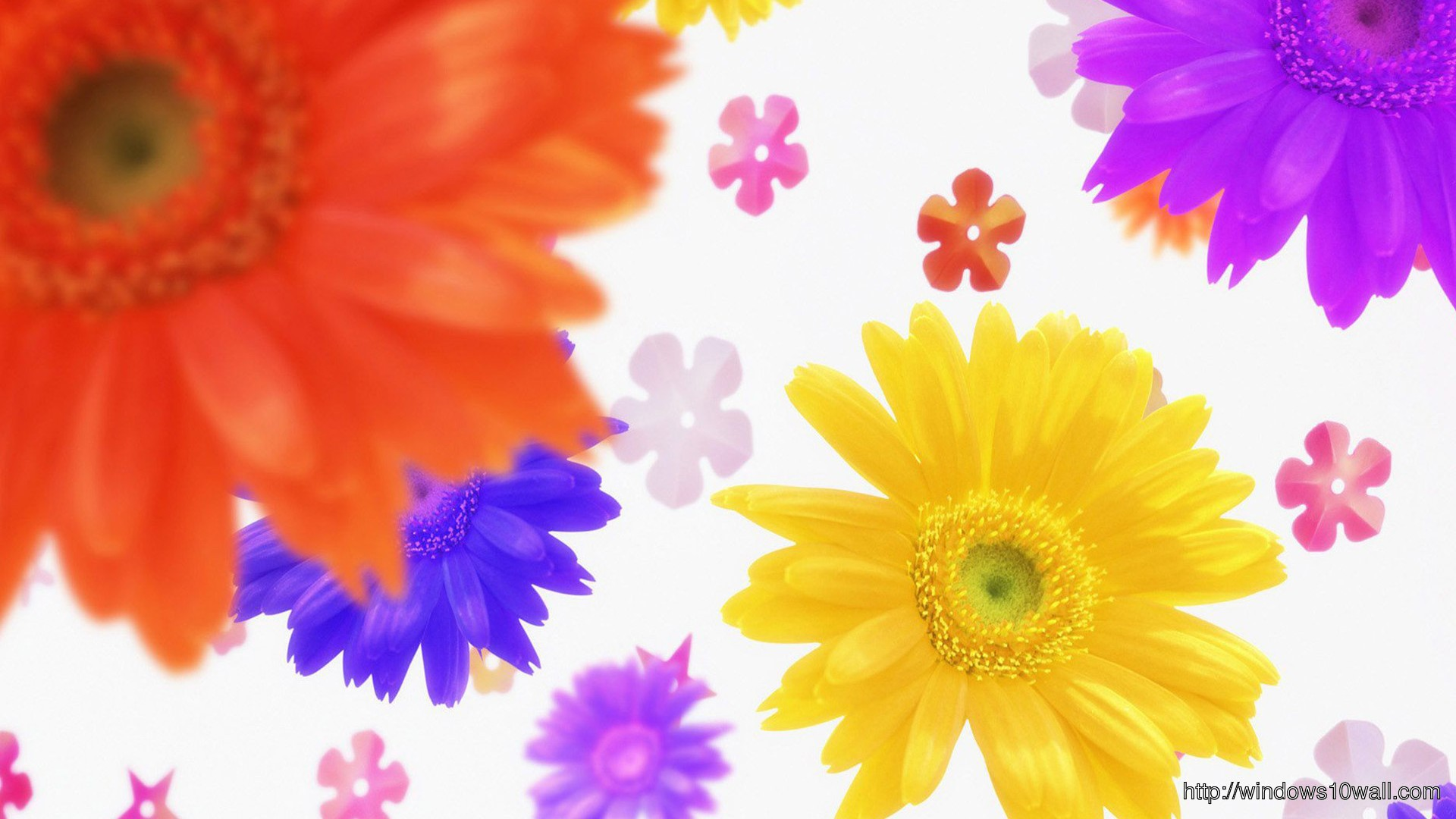 Flowers Colorful Background Wallpaper